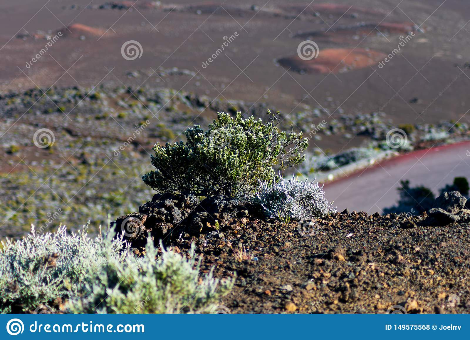 Krzak przegapia skalistego wulkanu krajobraz