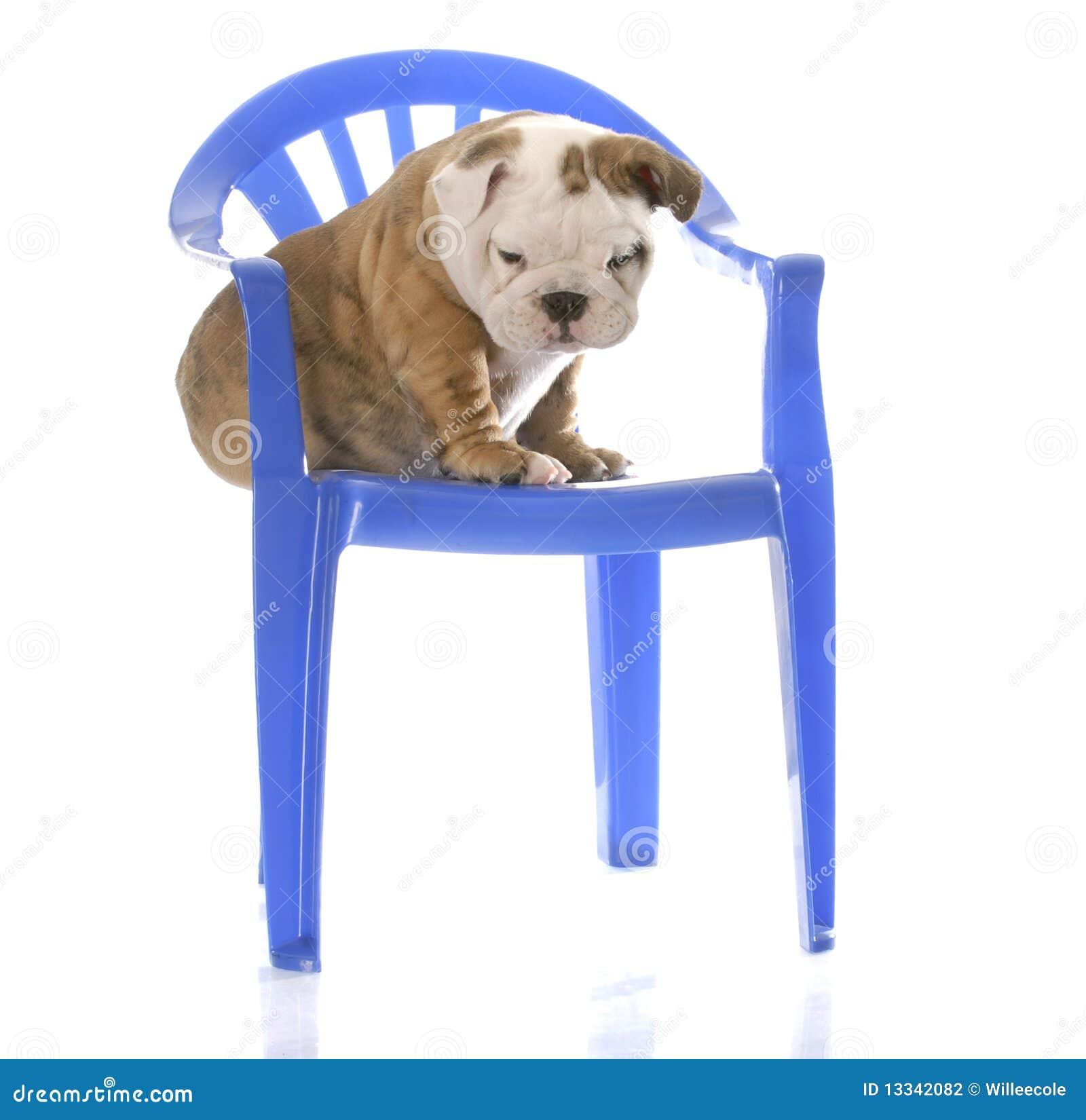 Krzesła szczeniaka obsiadanie