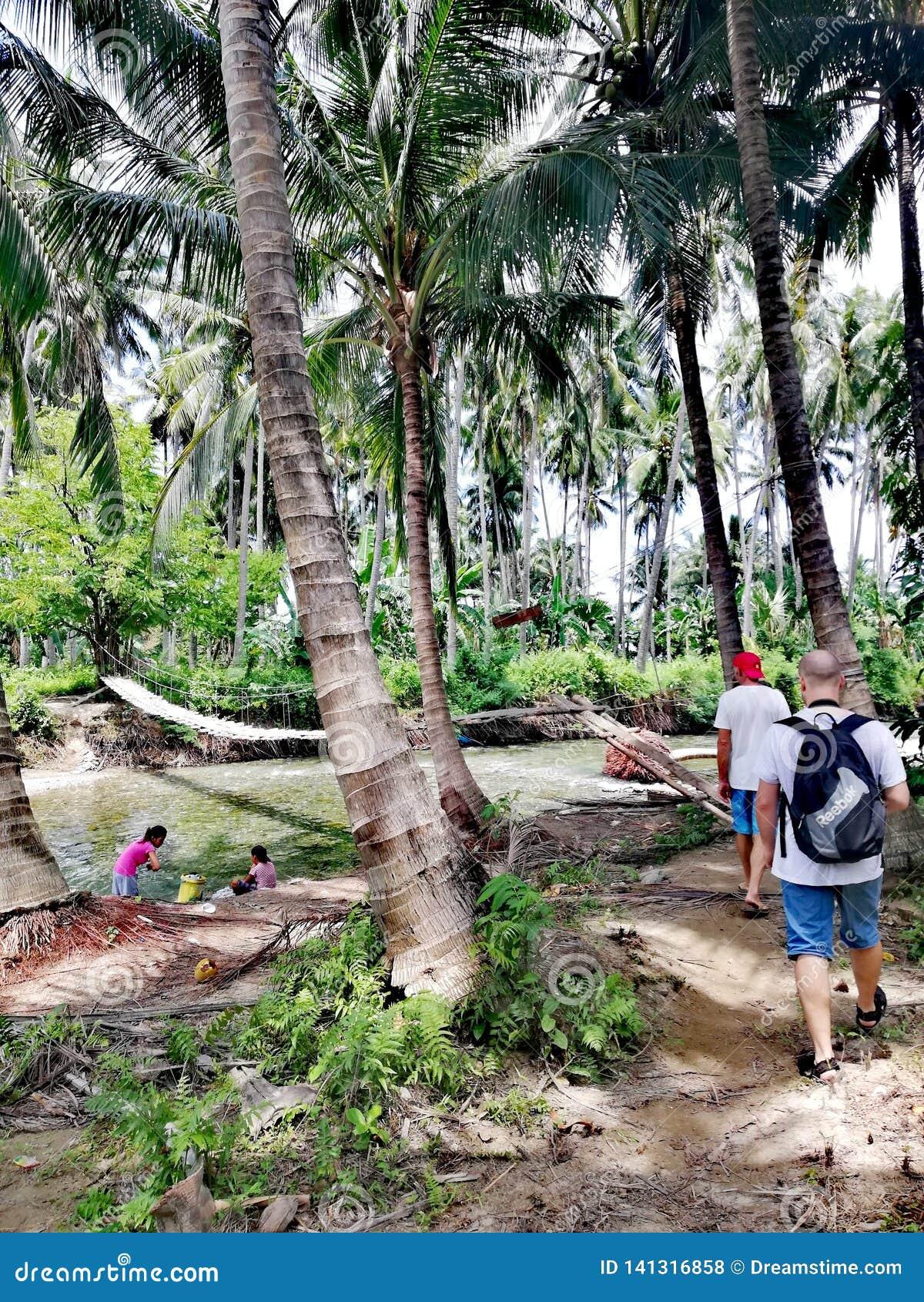 Krzyżować huśtawkowego most nad rzeką w tropikalnym lesie na Mindoro, Filipiny