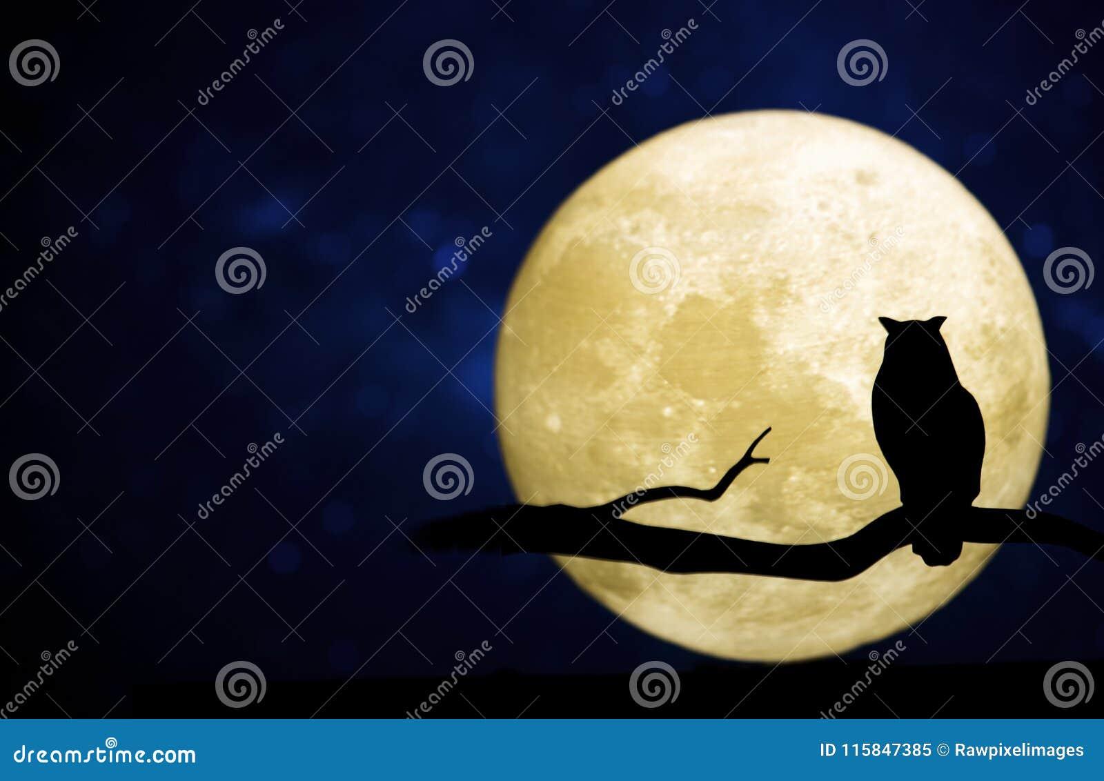 Księżyc w pełni w nocnym niebie