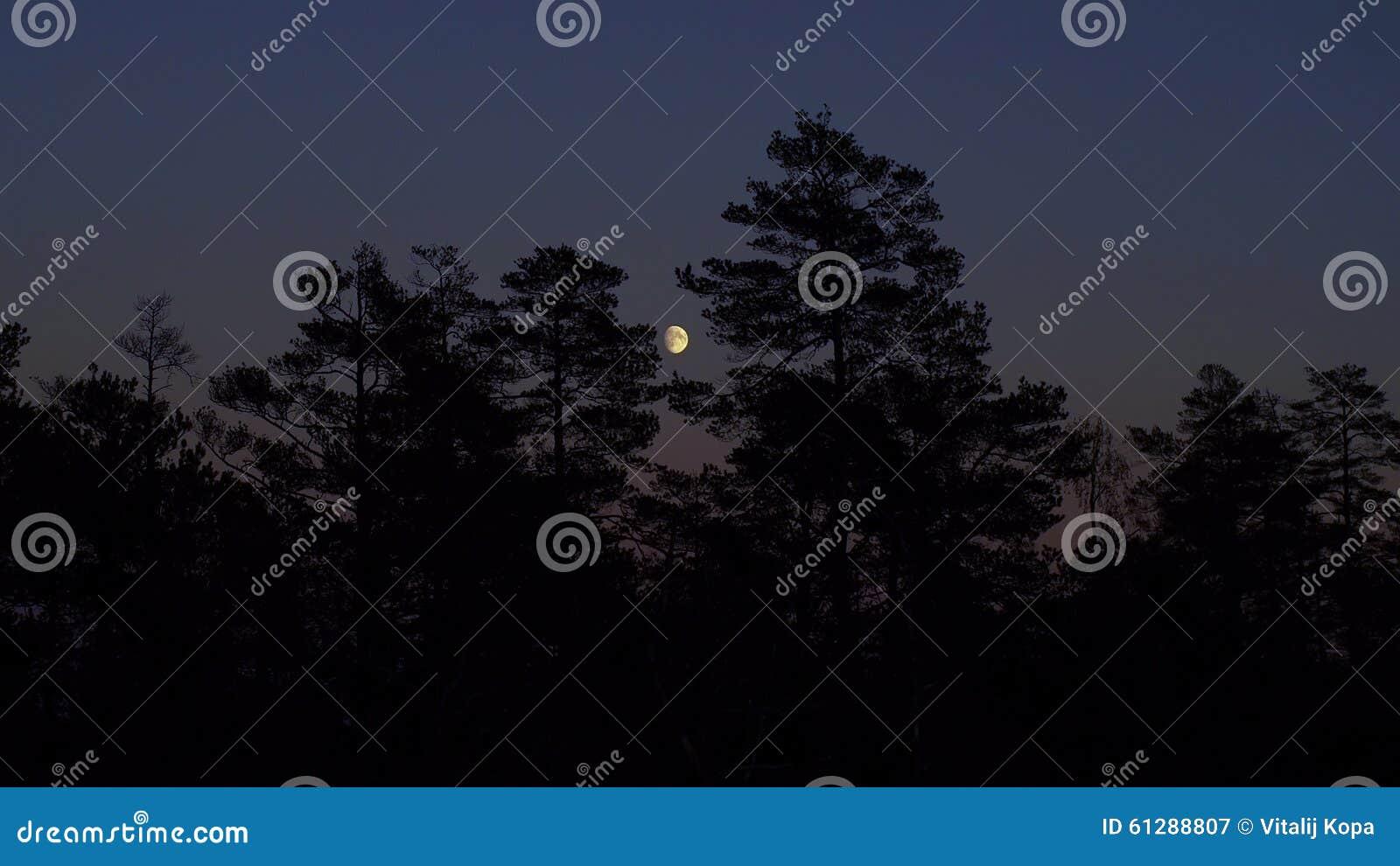 Księżyc wzrost nad lasem