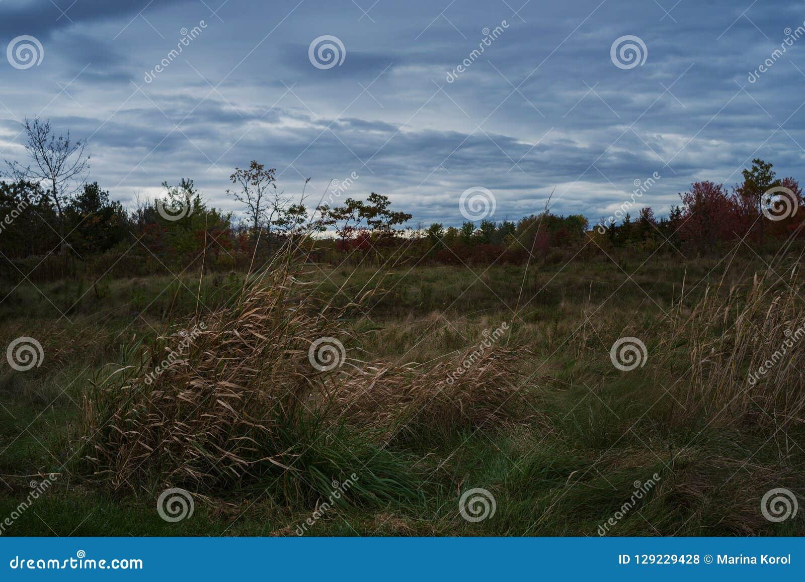 Kształtuje teren fotografię trawa krzaki z zmrokiem i - błękitny chmurny niebo w spadku