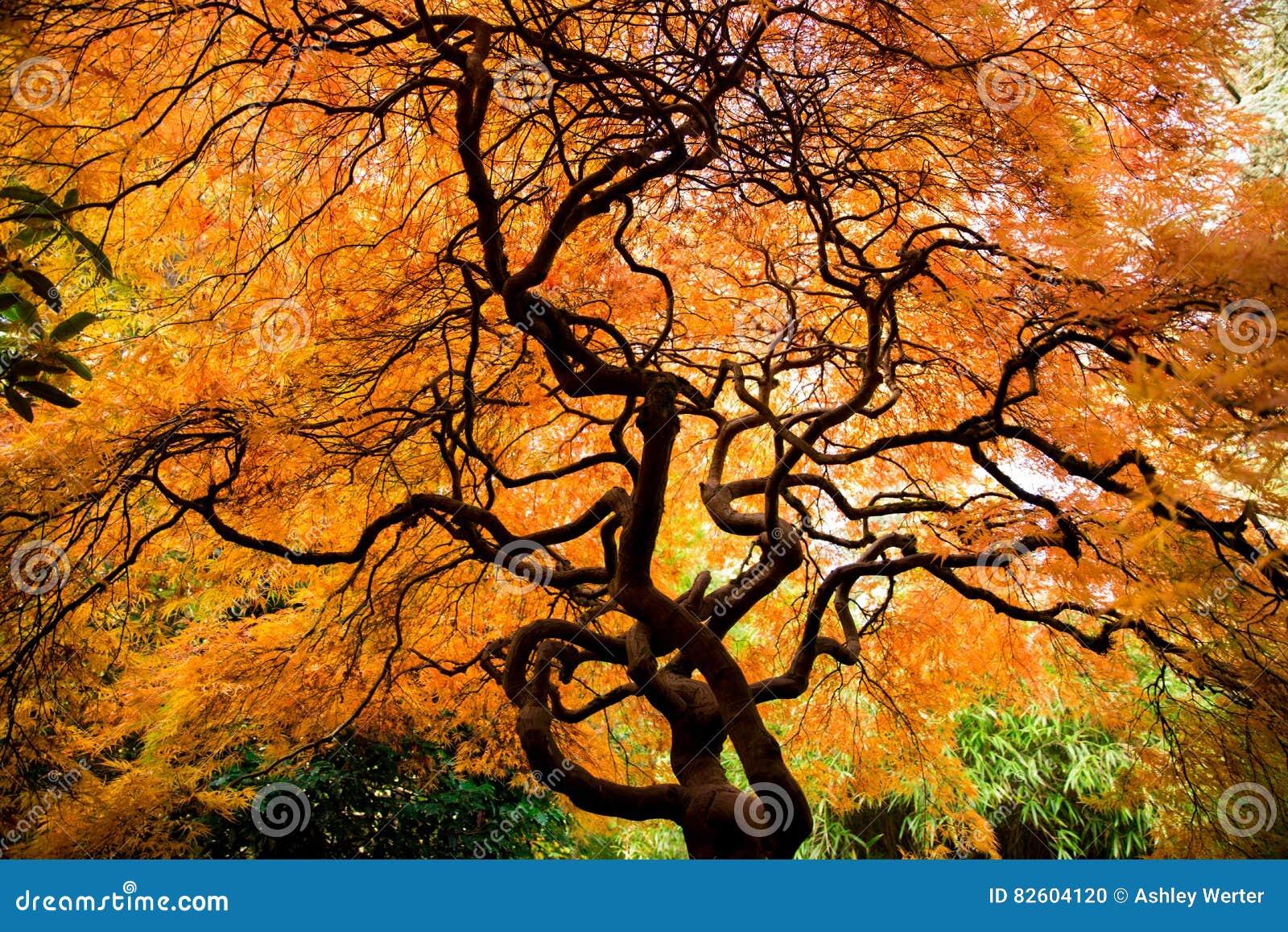 Kubota Garden stock photo. Image of maple, green, branch - 82604120