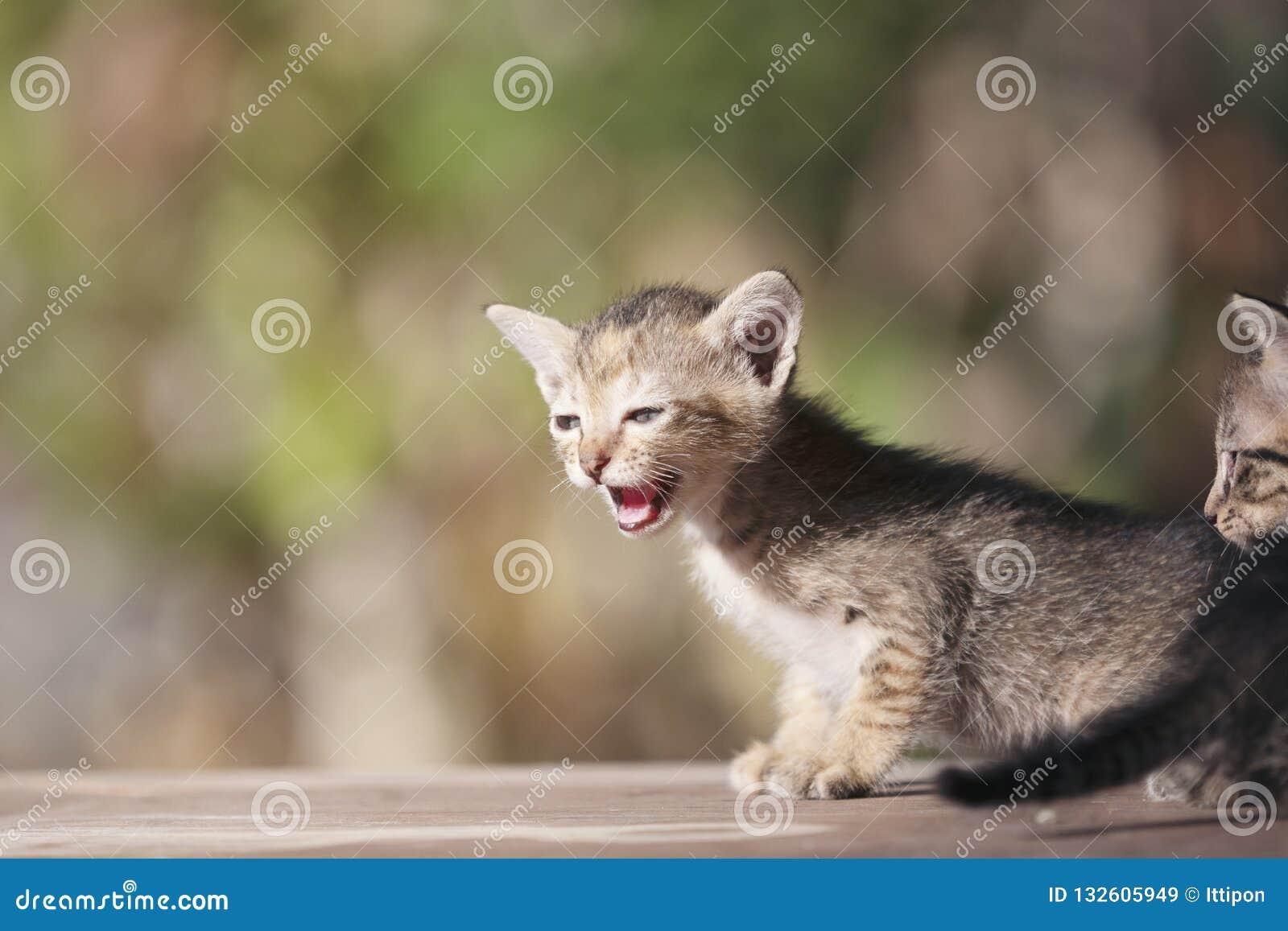 Kubus het uiterst kleine katje spelen