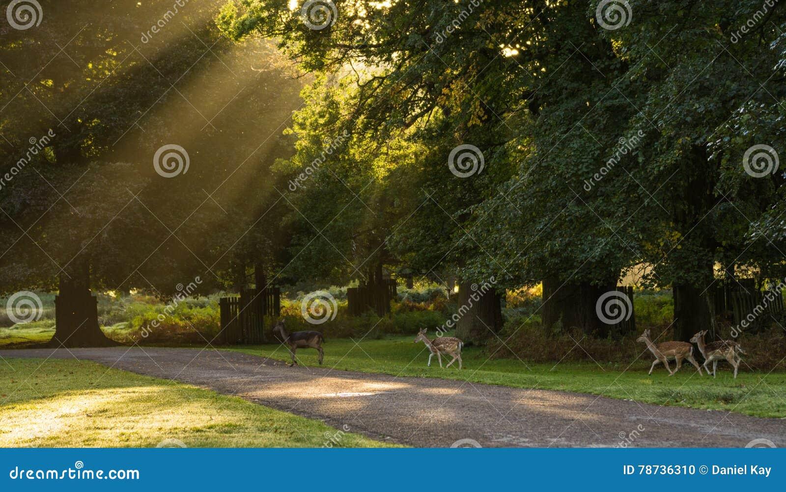 Kudde van Herten in Park