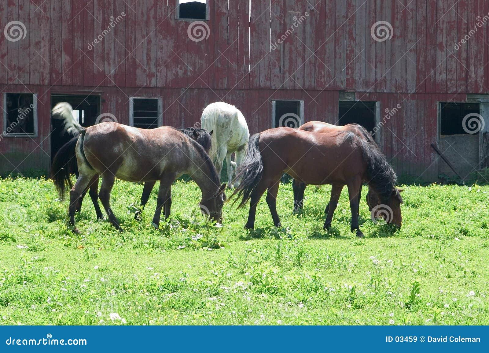 Kudde van paarden in weiland