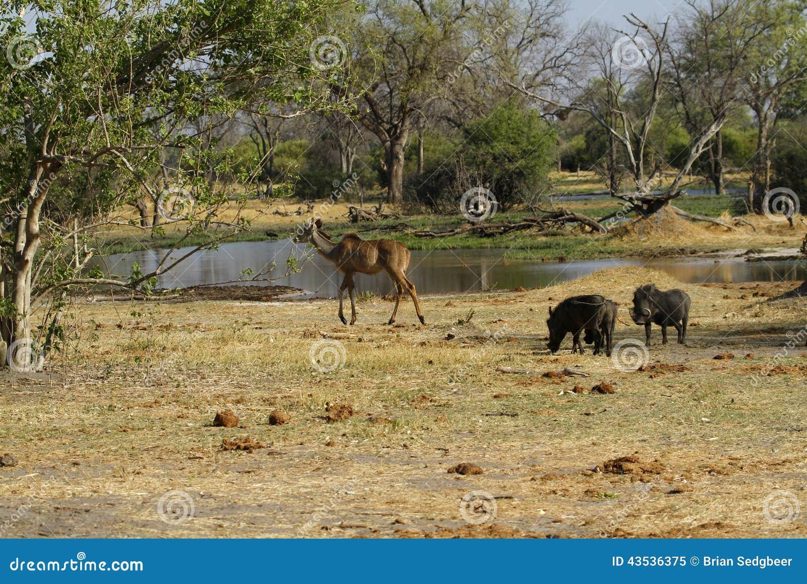 Kudu & Wart Hog Family