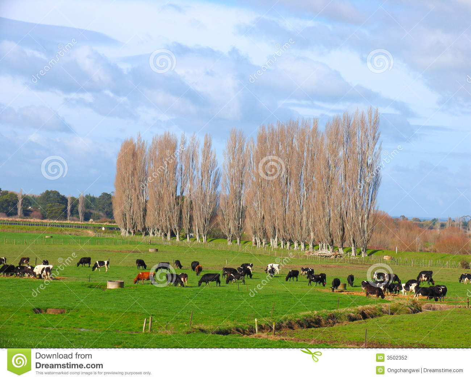 Kuh-Bauernhof