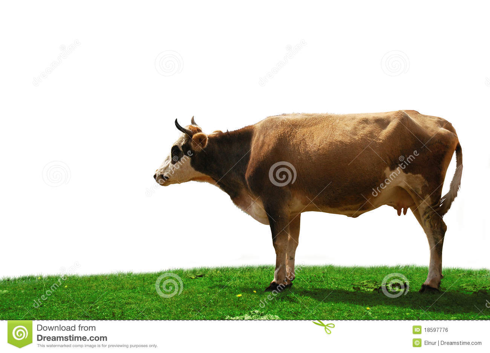 Kuh getrennt am Feld