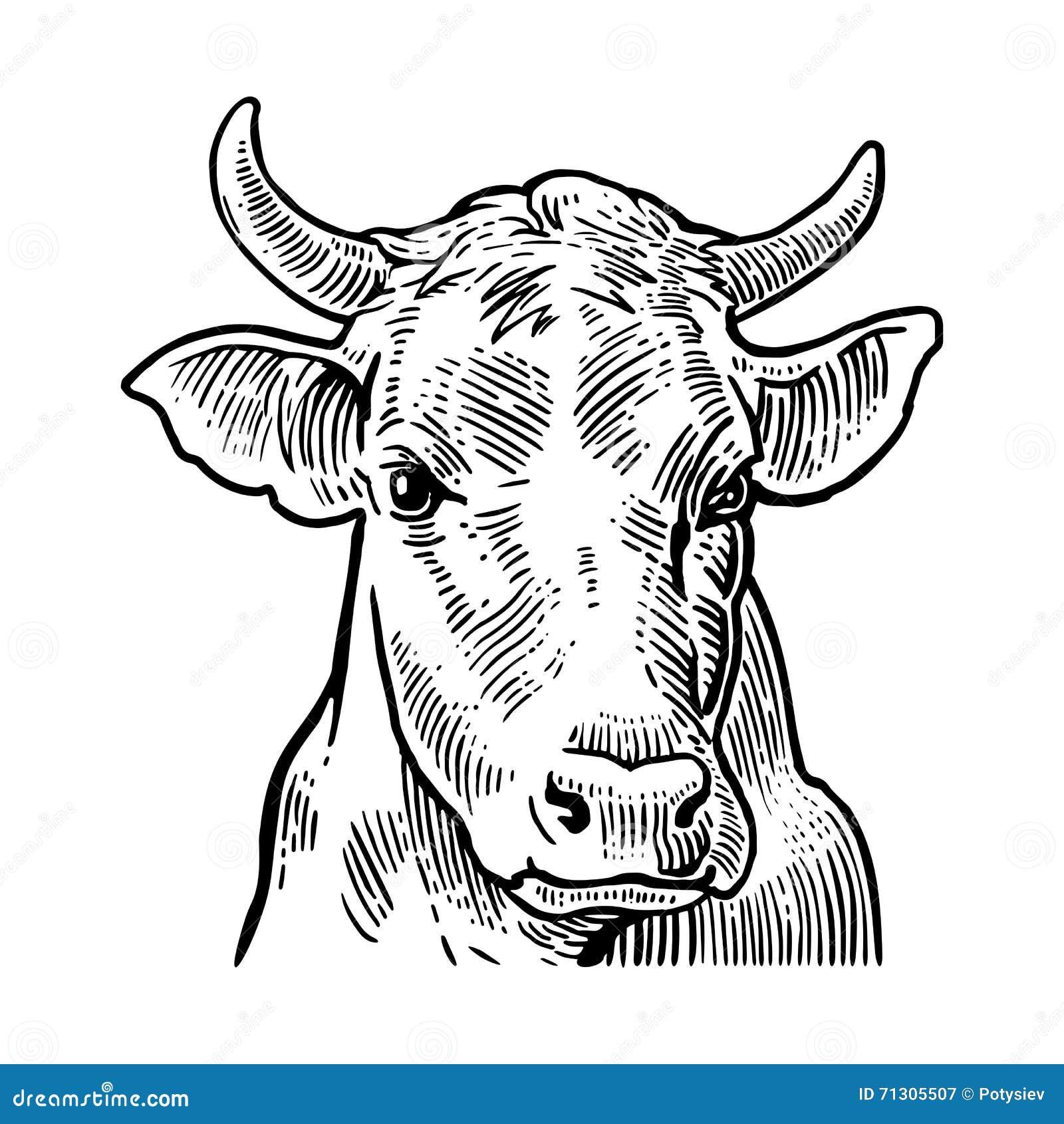 Beste Kuh Kopf Anatomie Fotos - Menschliche Anatomie Bilder ...