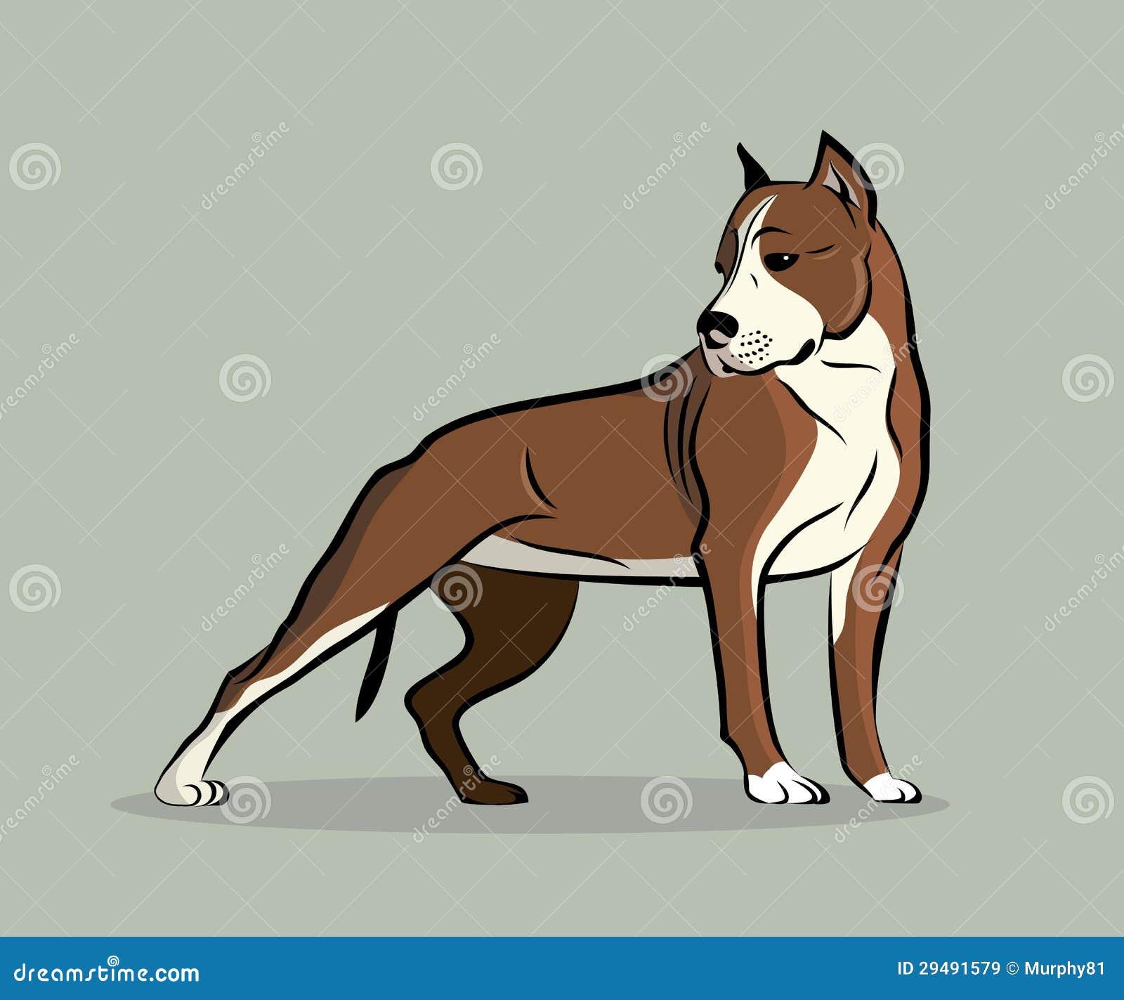 Kuil Bull terrier