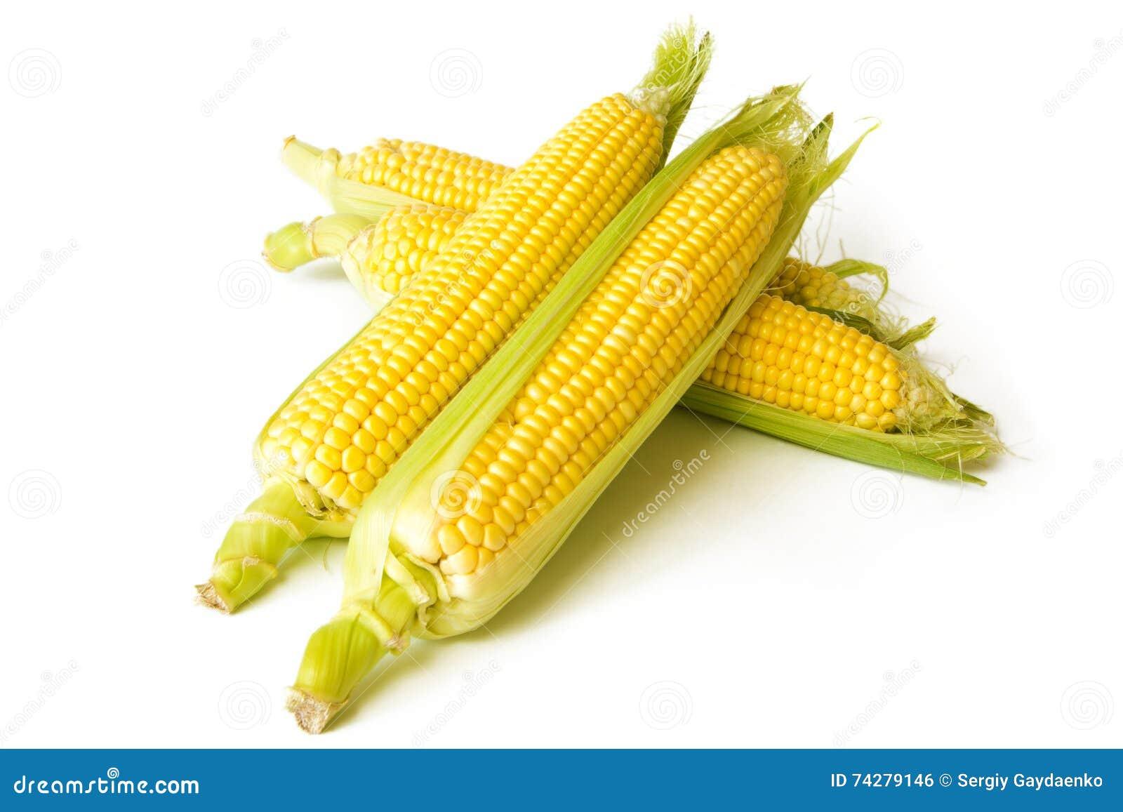 Kukurudza przy cobs odizolowywającymi na białym tle