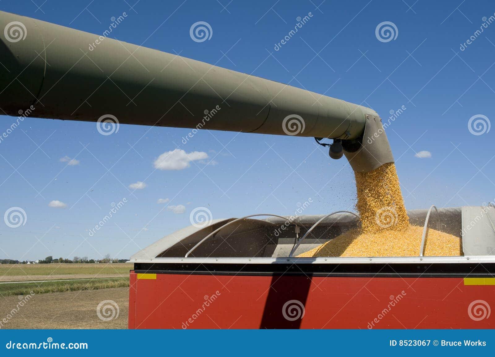 Kukurydzany żniwo