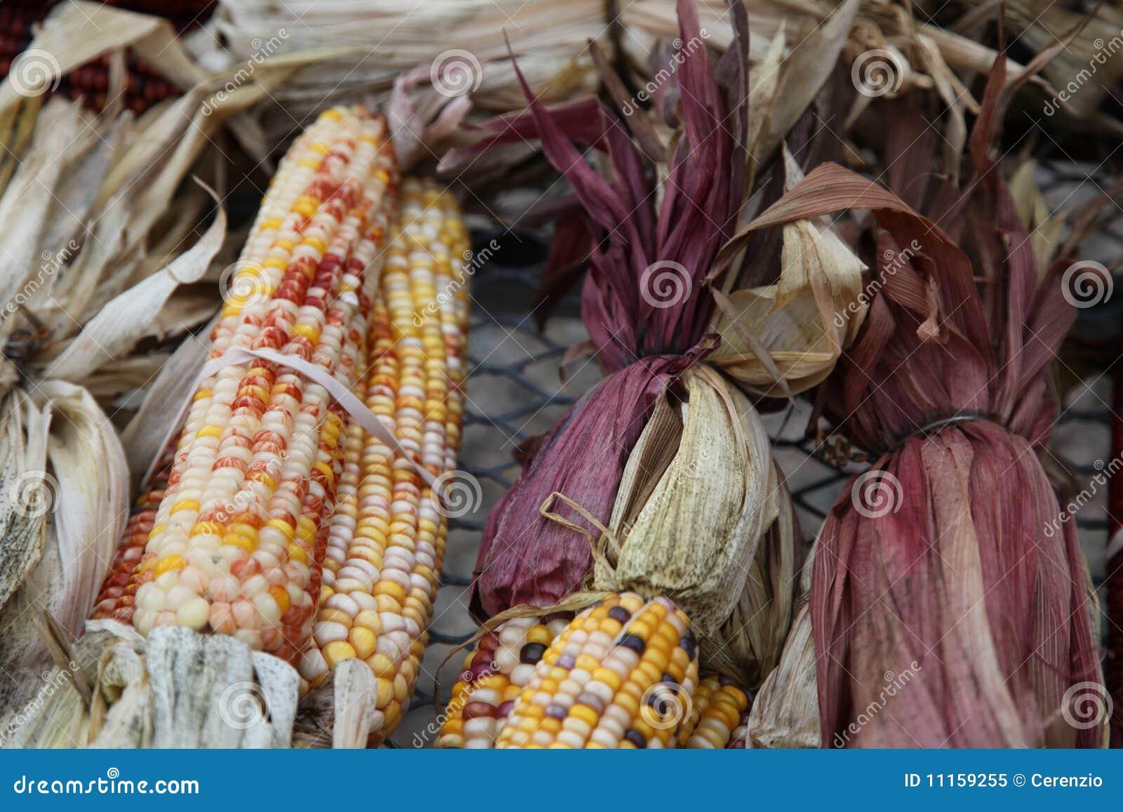 Kukurydzany labirynt pstrokacił