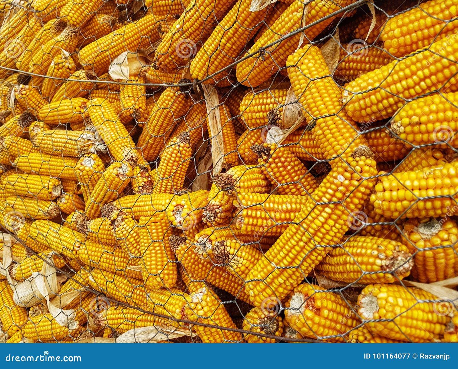 Kukurydzany szczegół