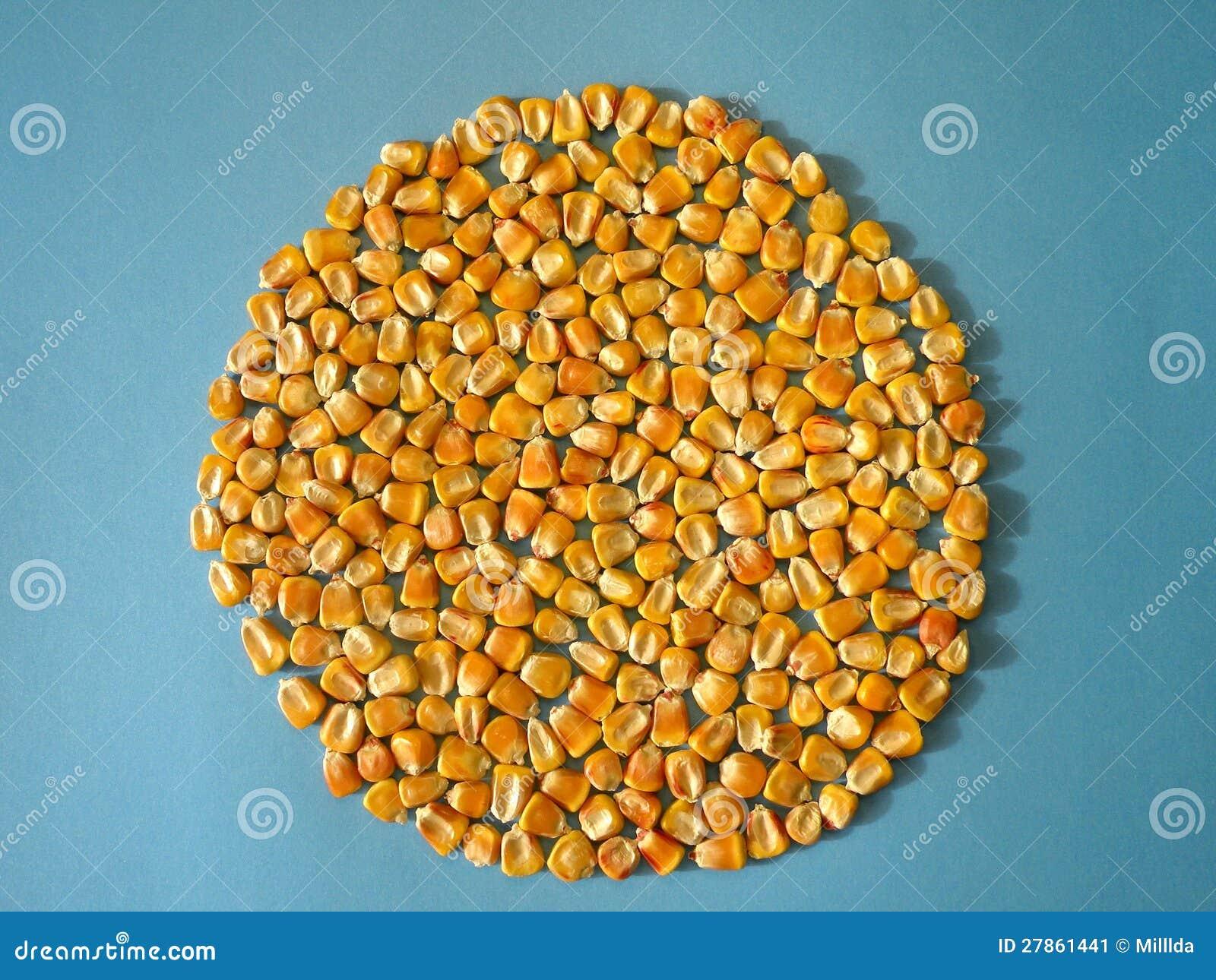 Kukurydzy kukurudza