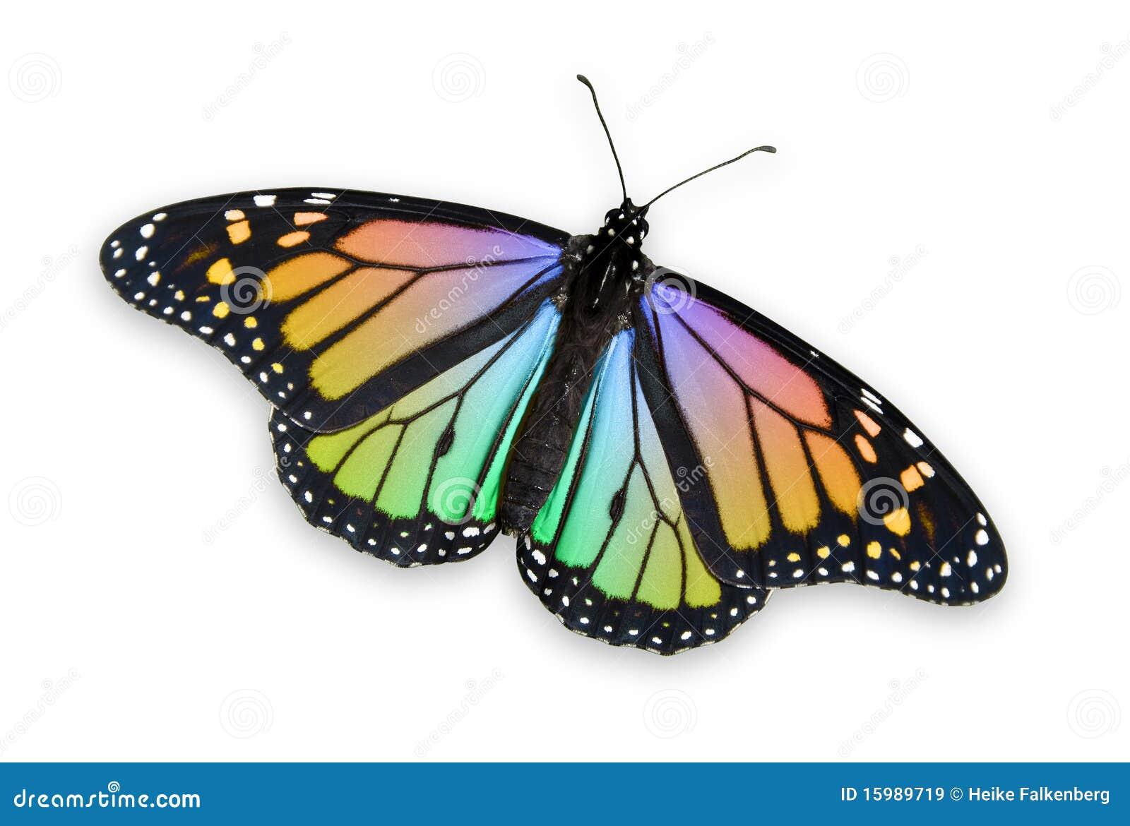 Kulör monark för fjäril