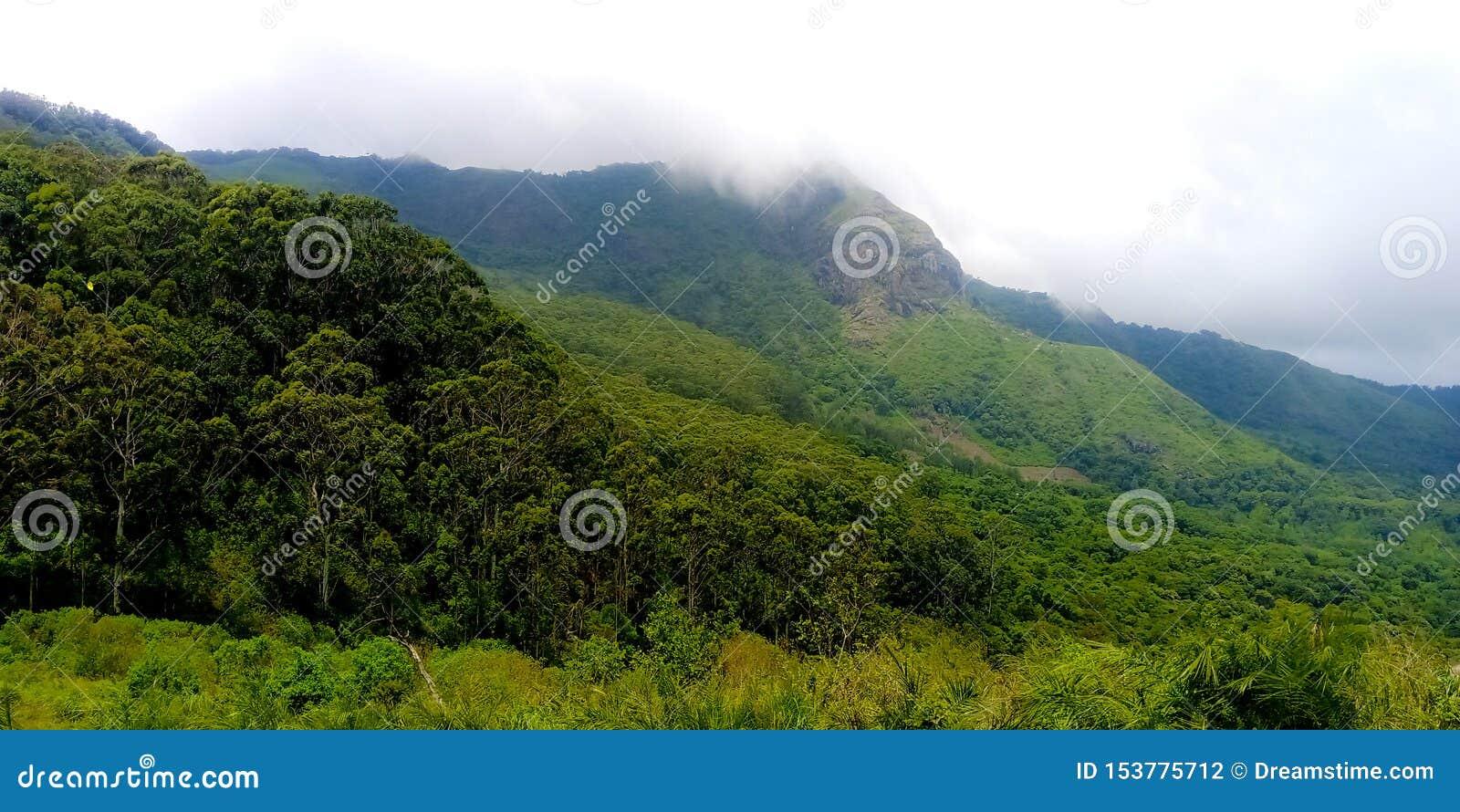 Kulleöverkantskog i Ooty, Indien södra Indien, gröna kullar
