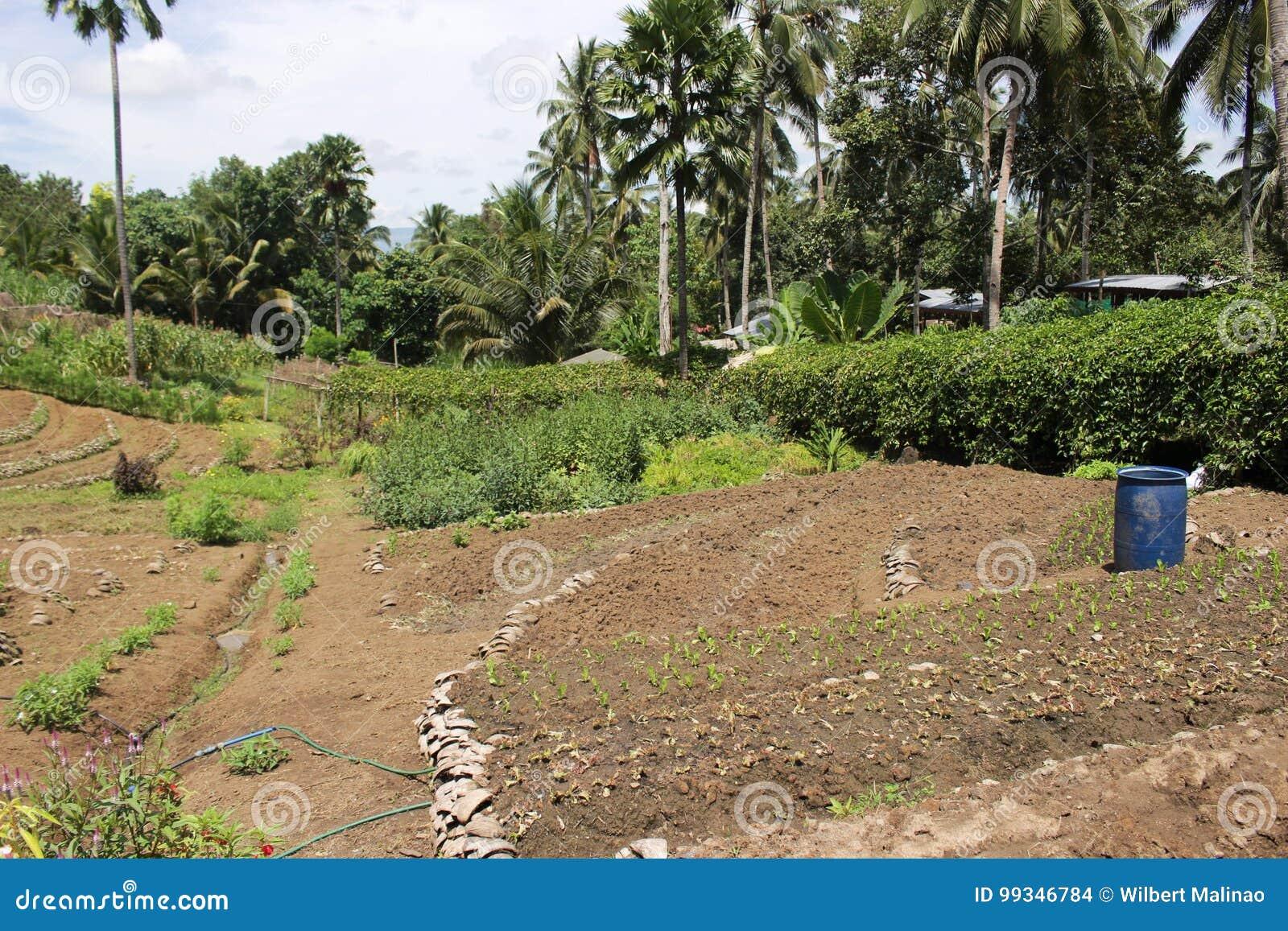 Kultiverad jord som är klar för pplanting av skogträd