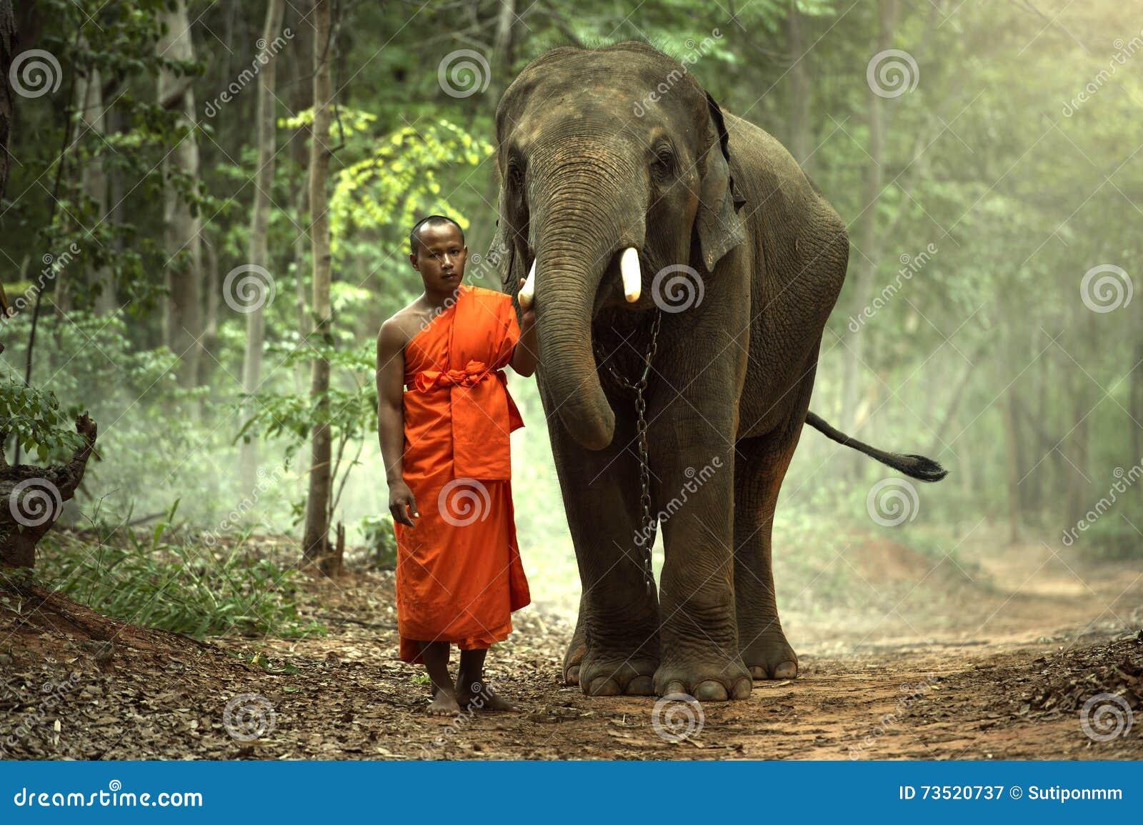 Kultur des buddhistischen Mönchs von Kui-Leuten am surin Thailand