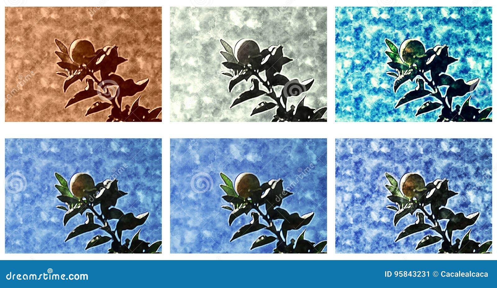 Kumquat - Achtergrond, grens of textuur