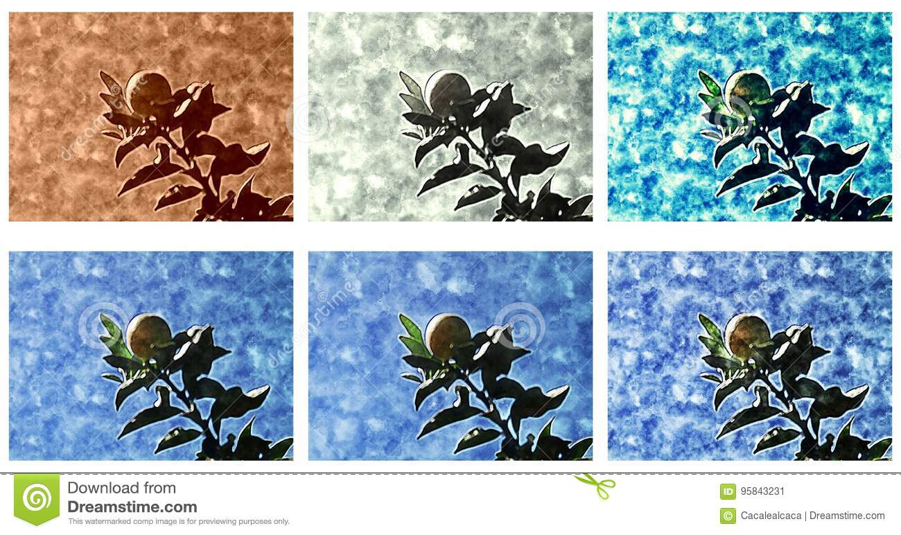 Kumquat - Background, border or texture