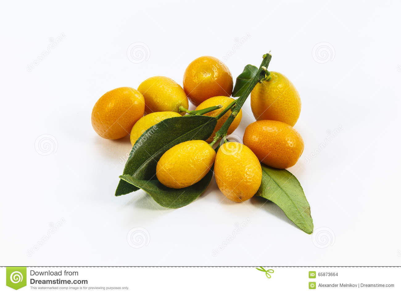 kumquat branches on a white background stock photo image of group
