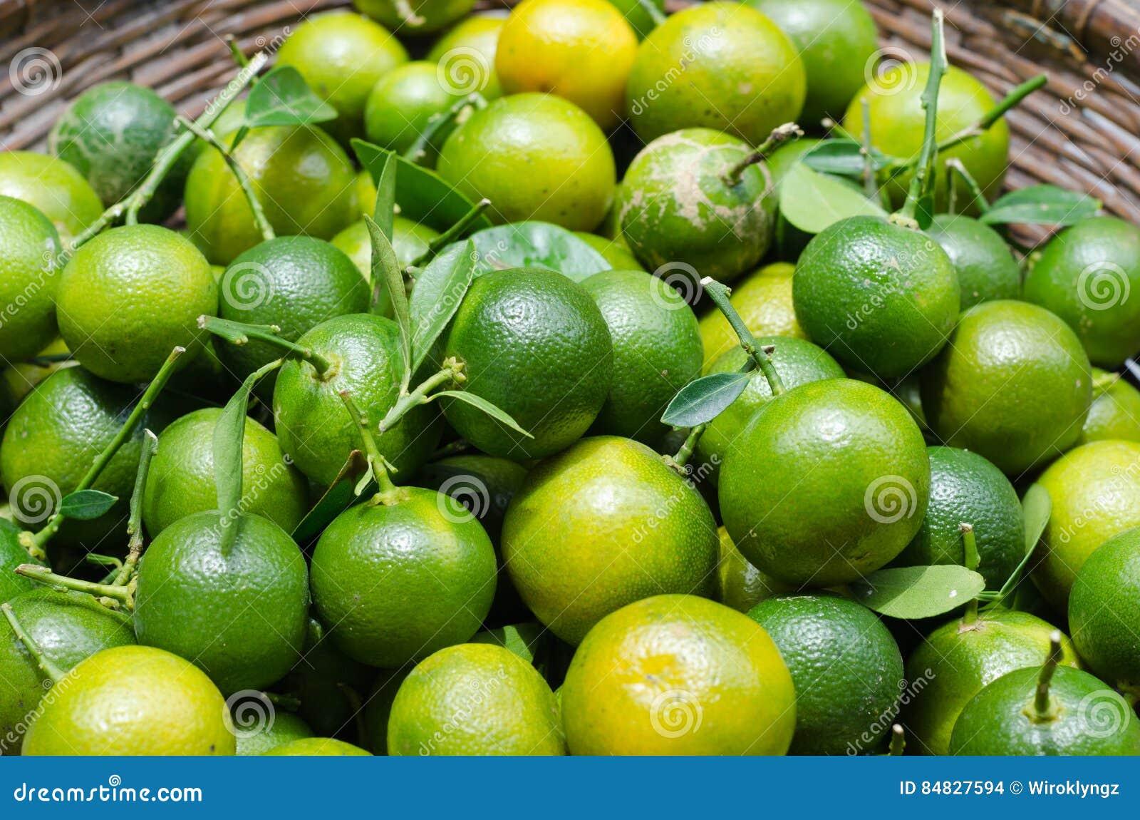 Kumquat verde na cesta