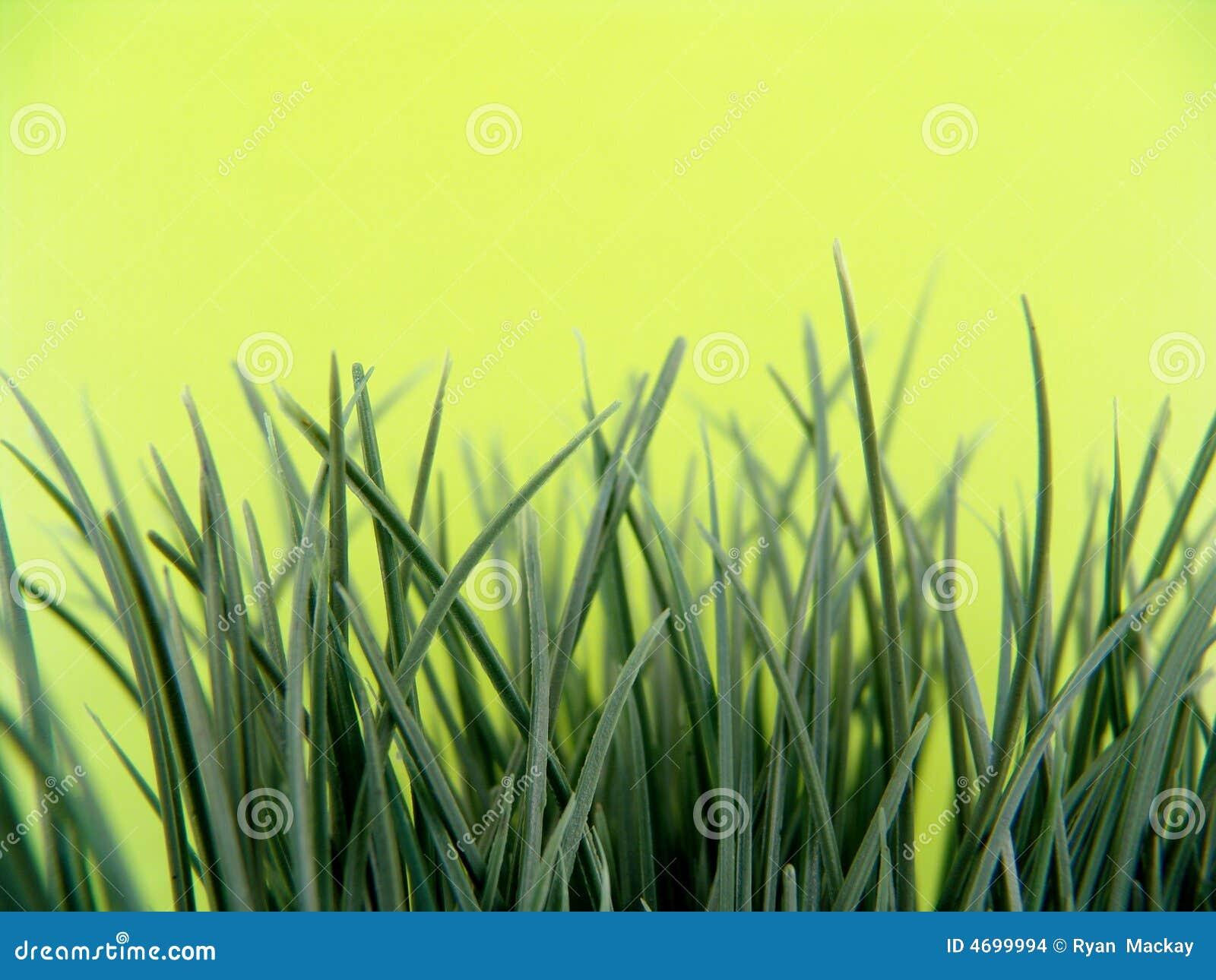 Kunstmatig gras stock afbeeldingen afbeelding 4699994 - Verkoop synthetisch gras ...