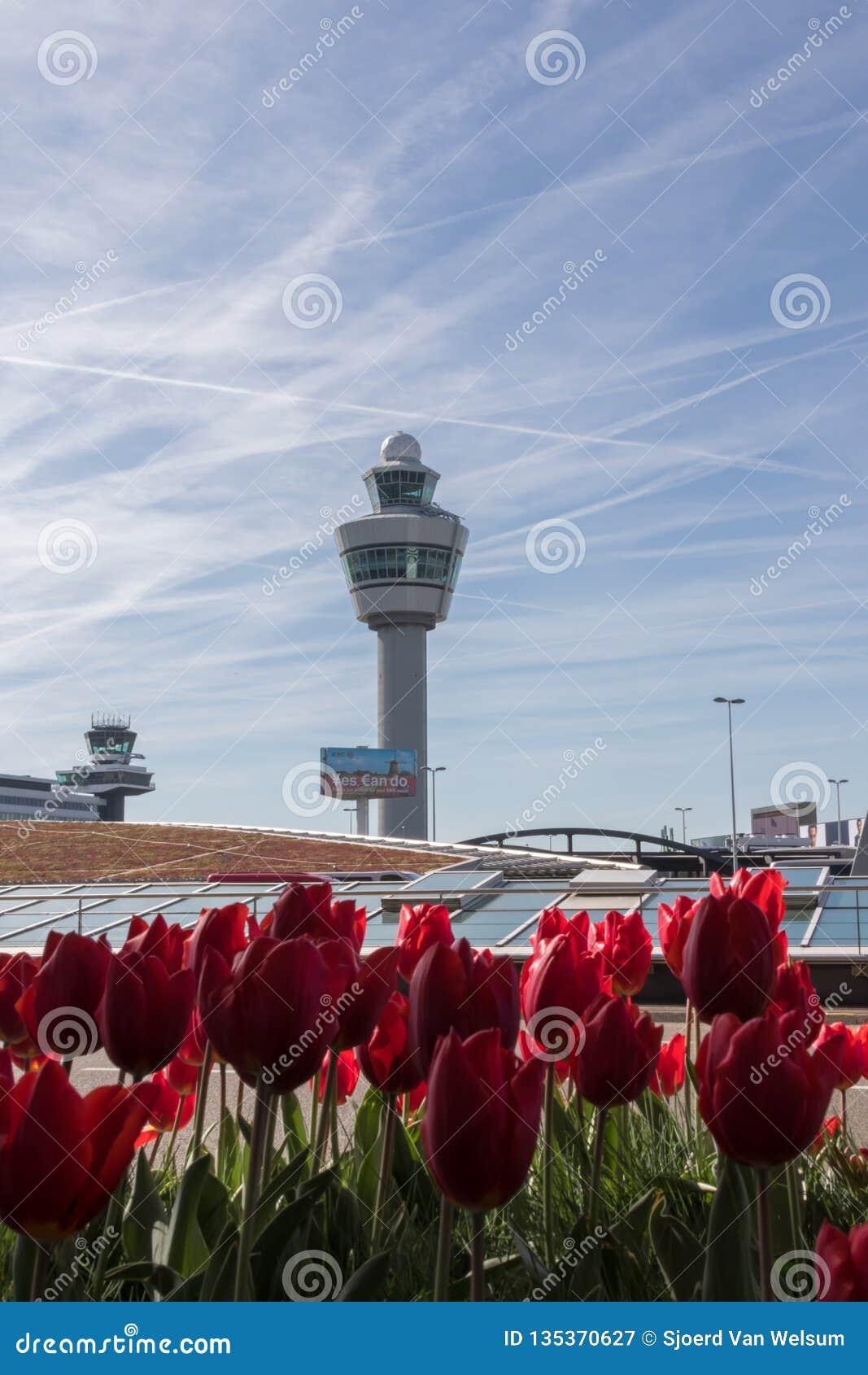 Kupczy basztowego Schiphol lotnisko z tullips w przedpolu