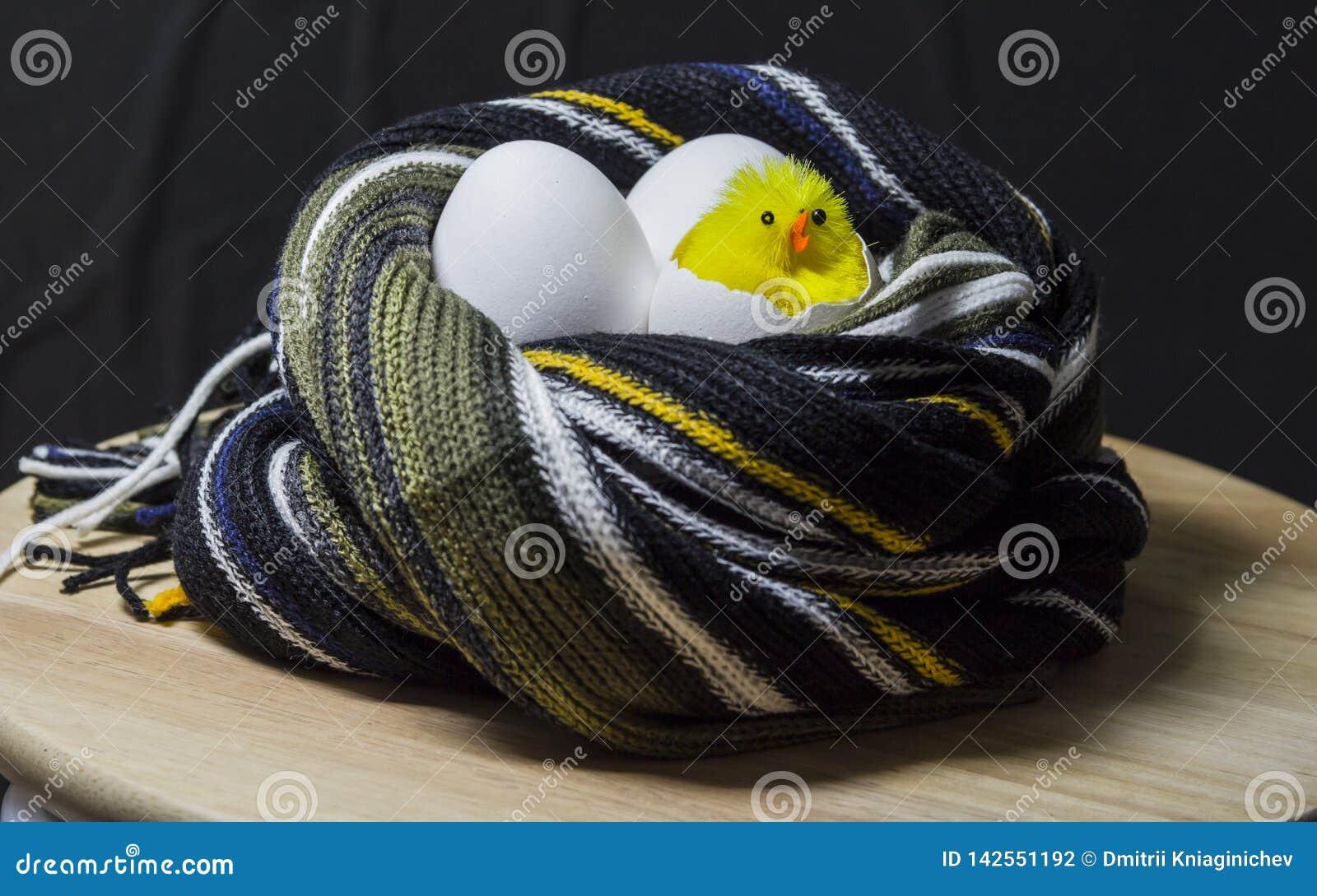 Kurczątko klujący się od jajka W gniazdeczku szalik trzy jajka