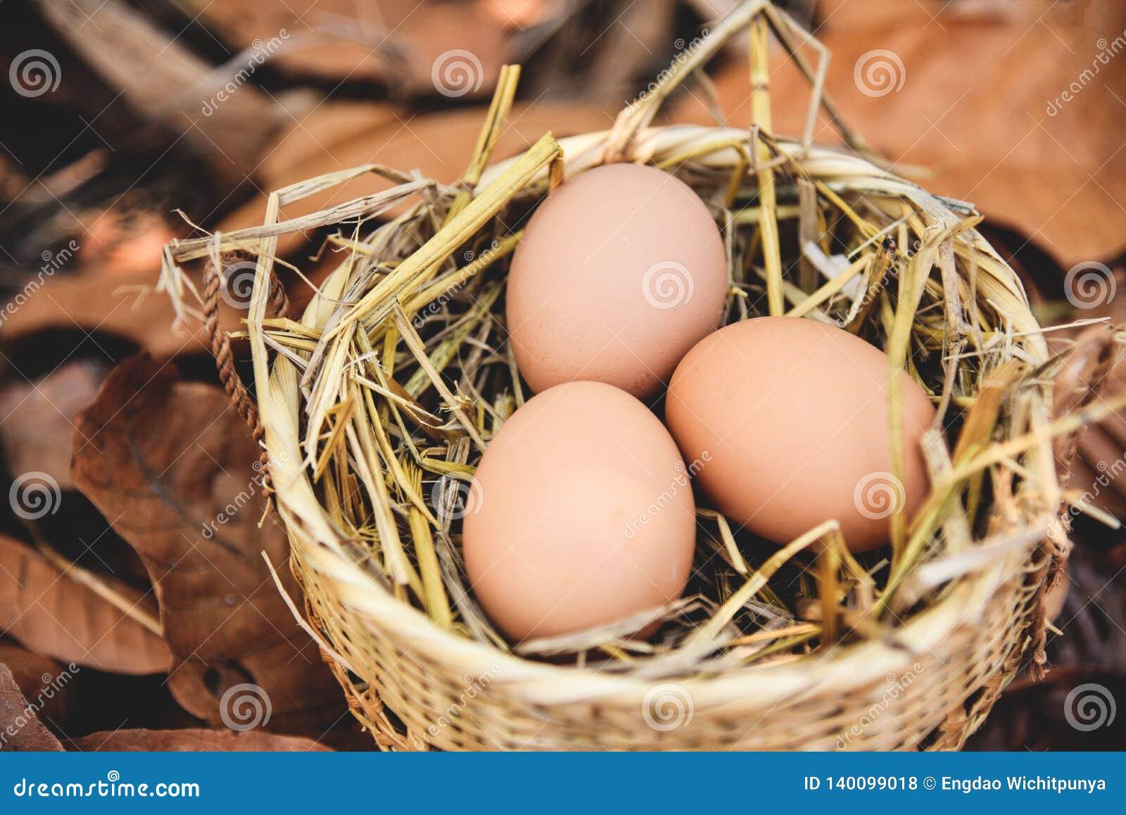 Kurczaków jajek kosza gniazdeczko z suchym jesień liści tłem