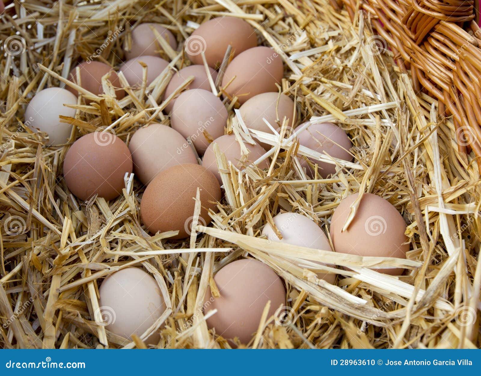 Kurczaków jajka