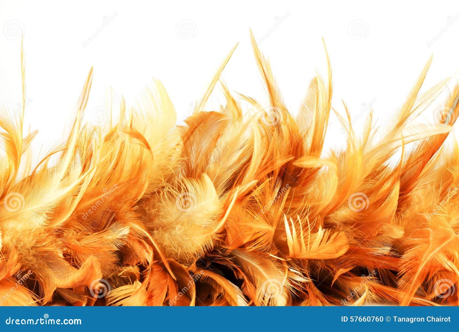 Kurczak piórkowa tekstura