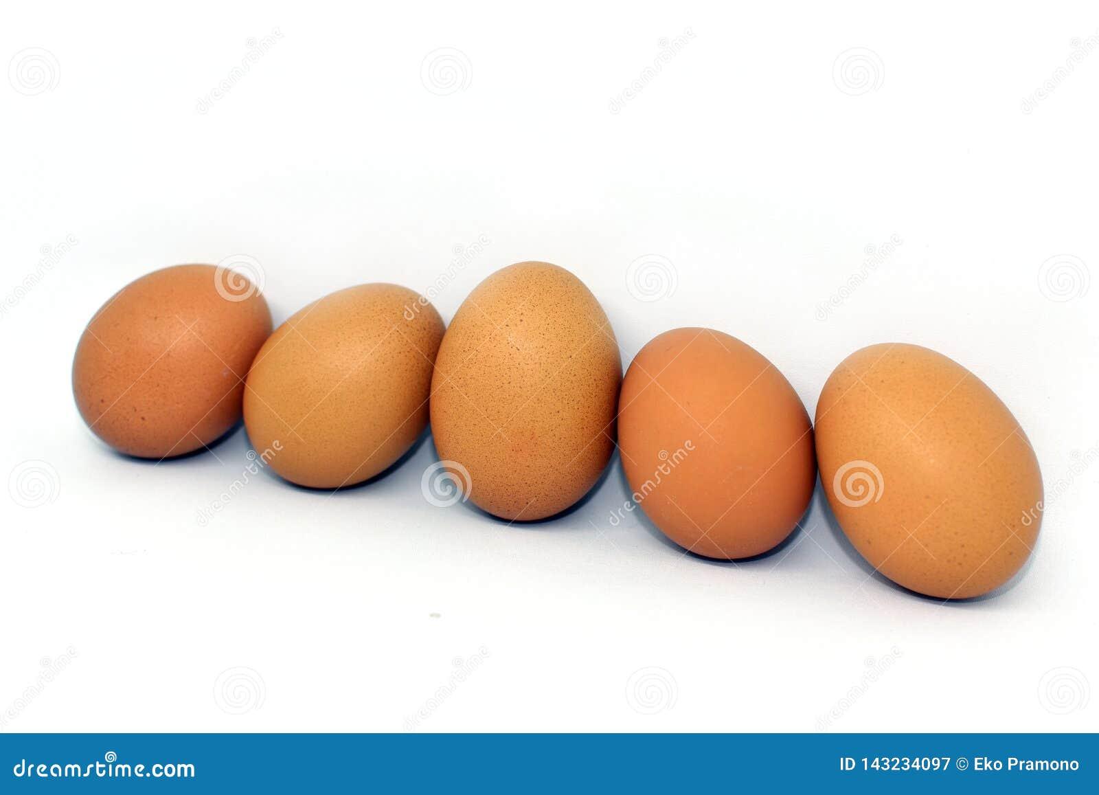 Kurczaka jajko odizolowywający na białym tle