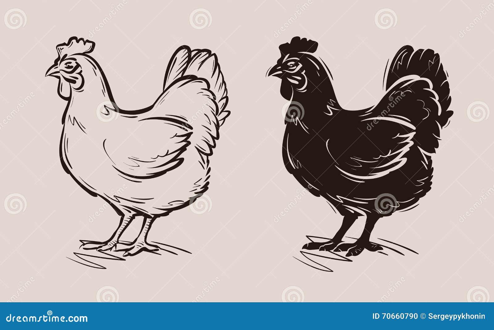 Kurczaka wektoru logo gospodarstwo rolne, drób, karmazynka, ptactwo ikona