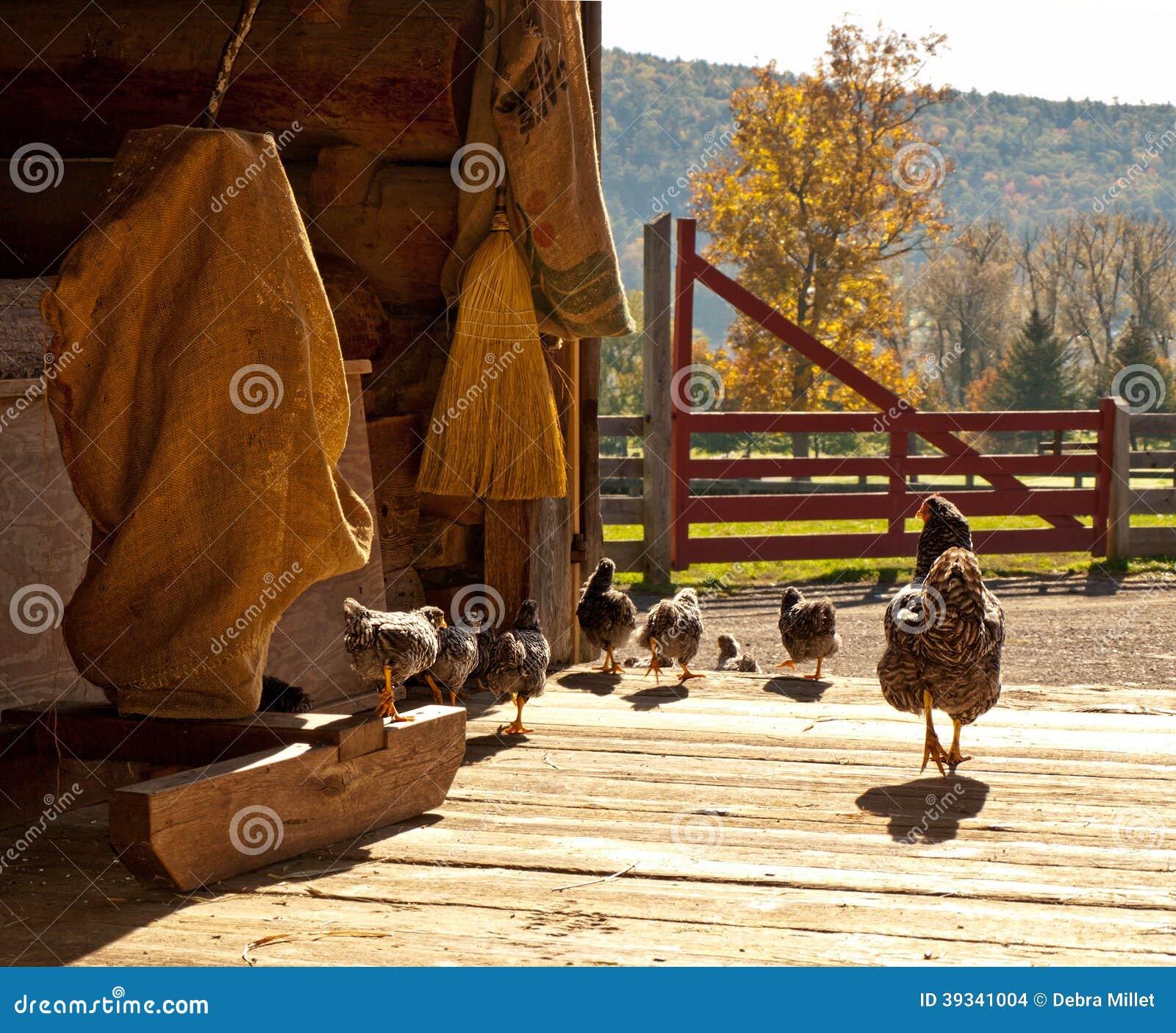 Kurczaki i dzieci kurczątka