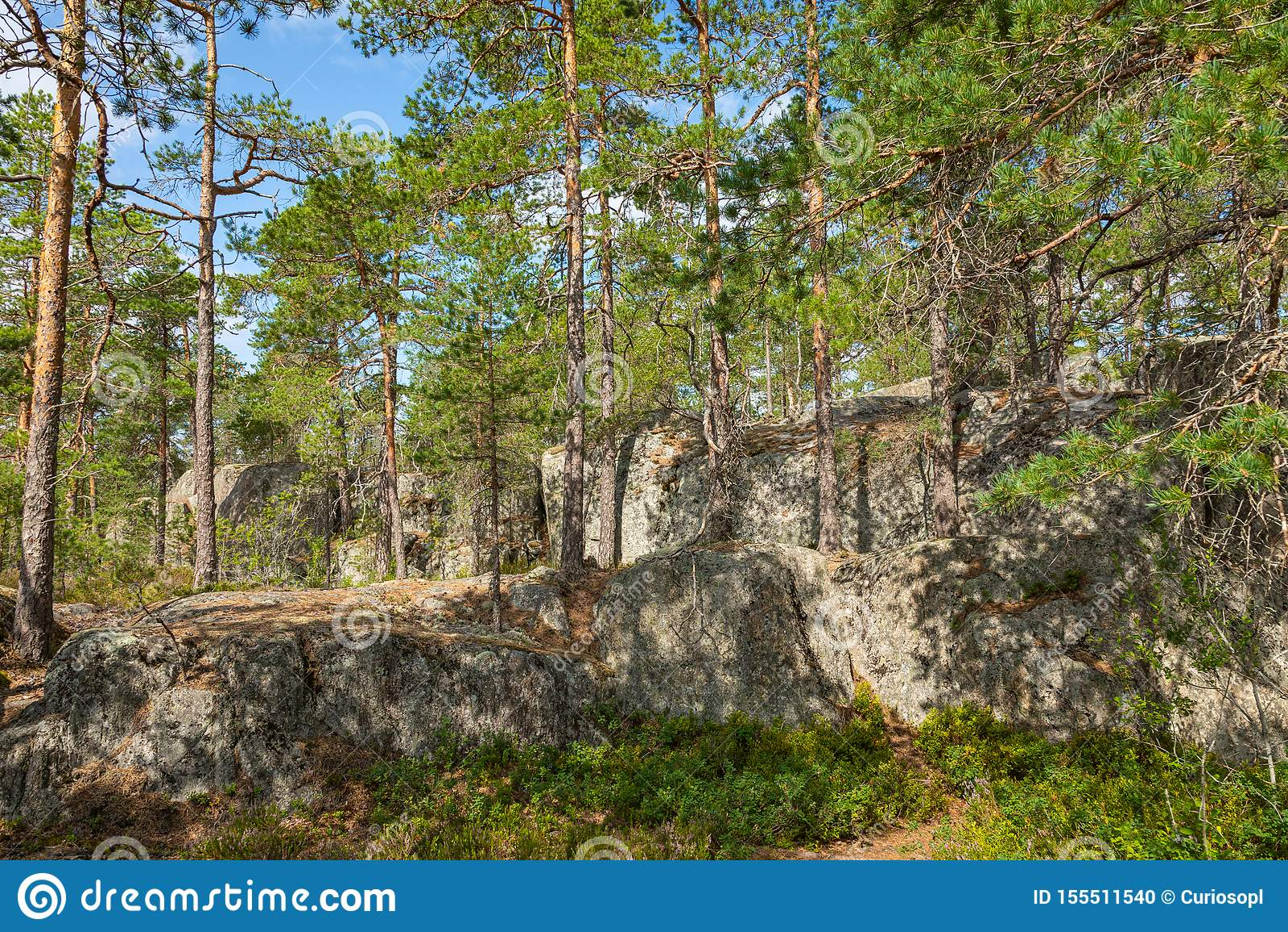 Kurjenrahka National Park. Nature trail. Green forest at summer time. Turku, Finland. Nordic natural landscape. Scandinavian