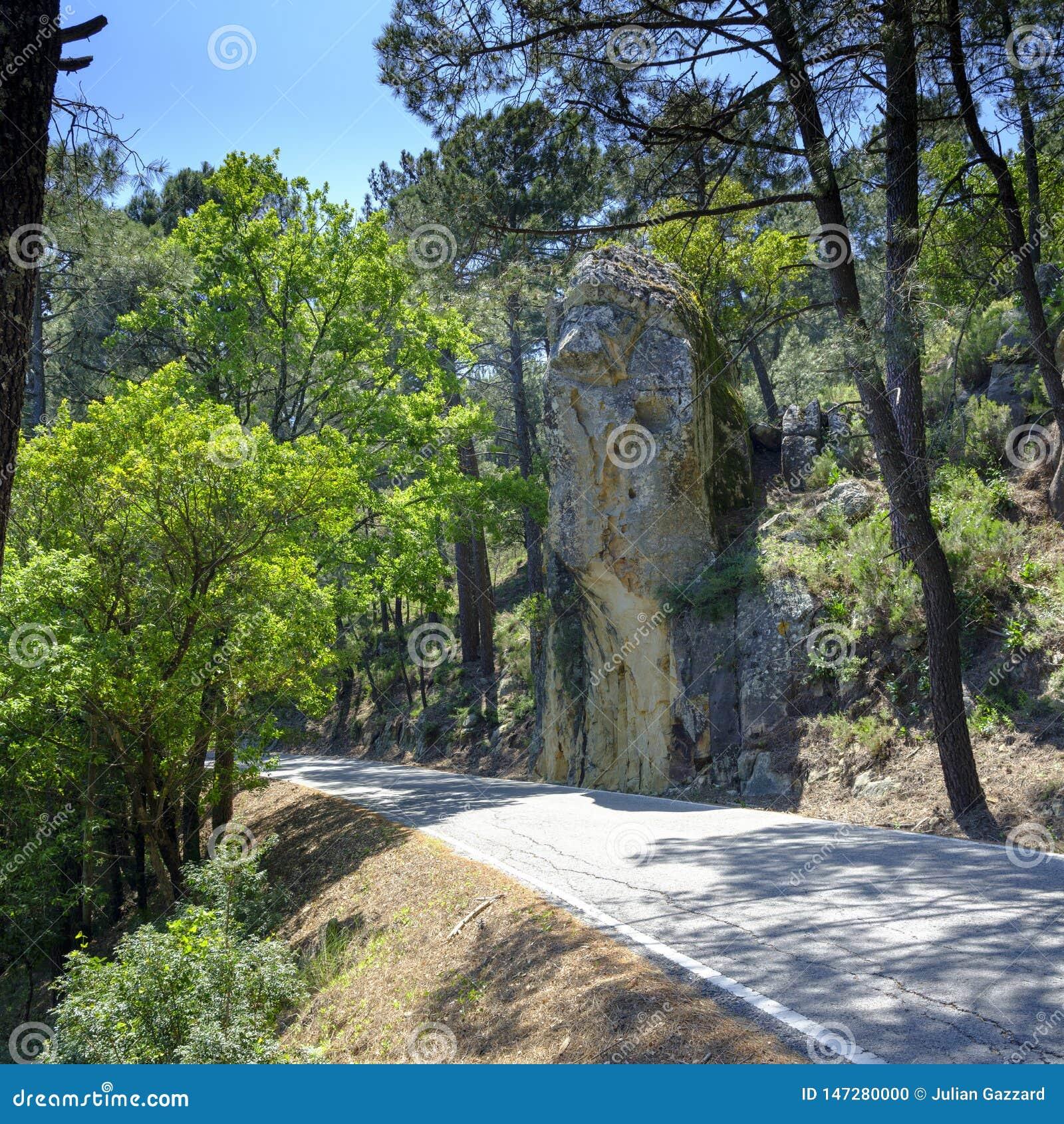Kurkt bomen van Andalucia, Spanje
