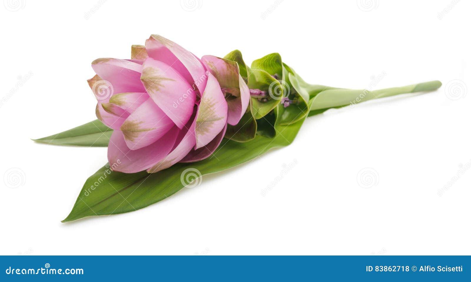Kurkuma mit Blume