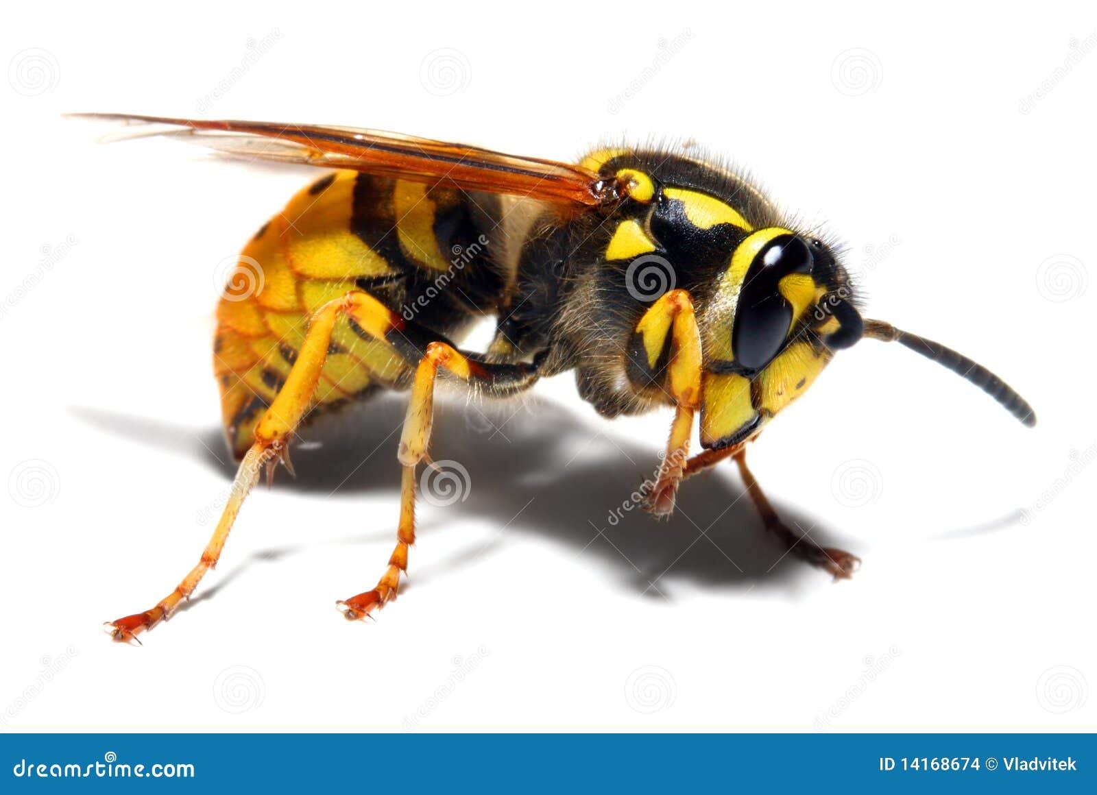 Kurtki osy kolor żółty