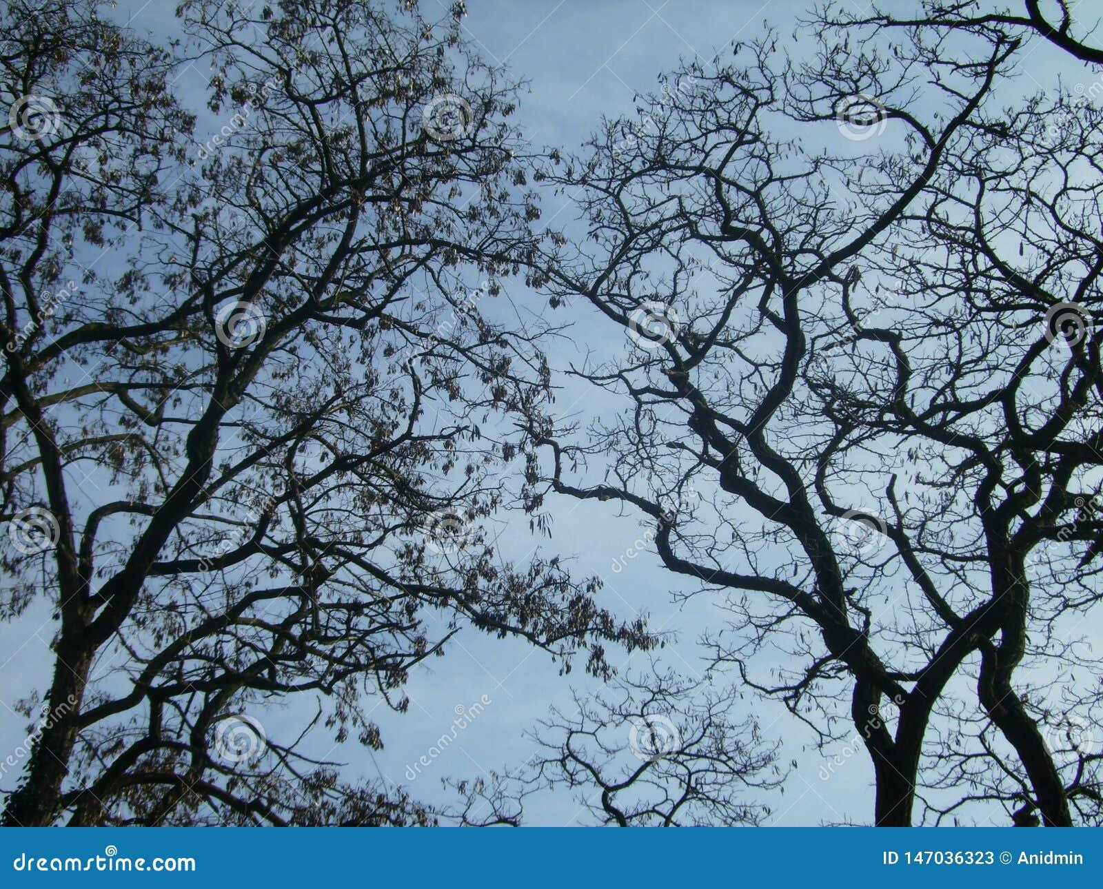 Kurven-Niederlassungen von Bäumen im Frühjahr auf dem Hintergrund des blauen Himmels