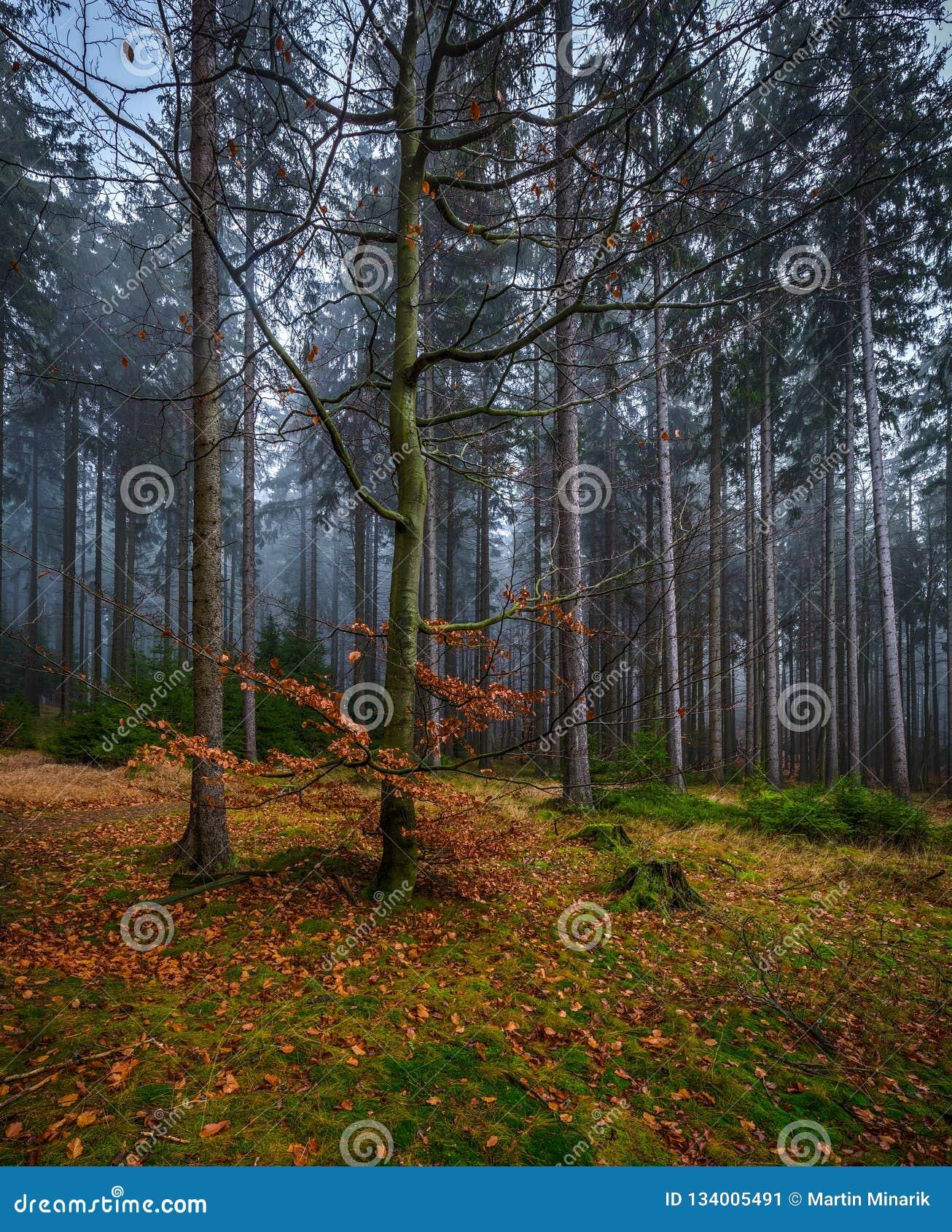 Kuslig mystikerskog med grönt gräs och färgrika stupade träd