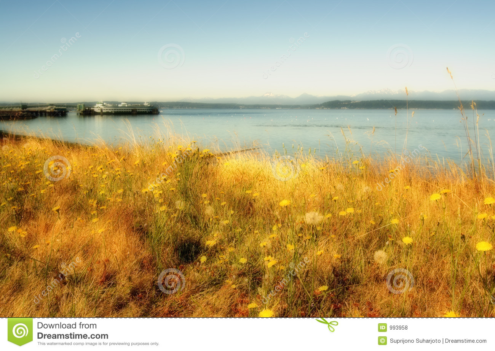 Kust landschap