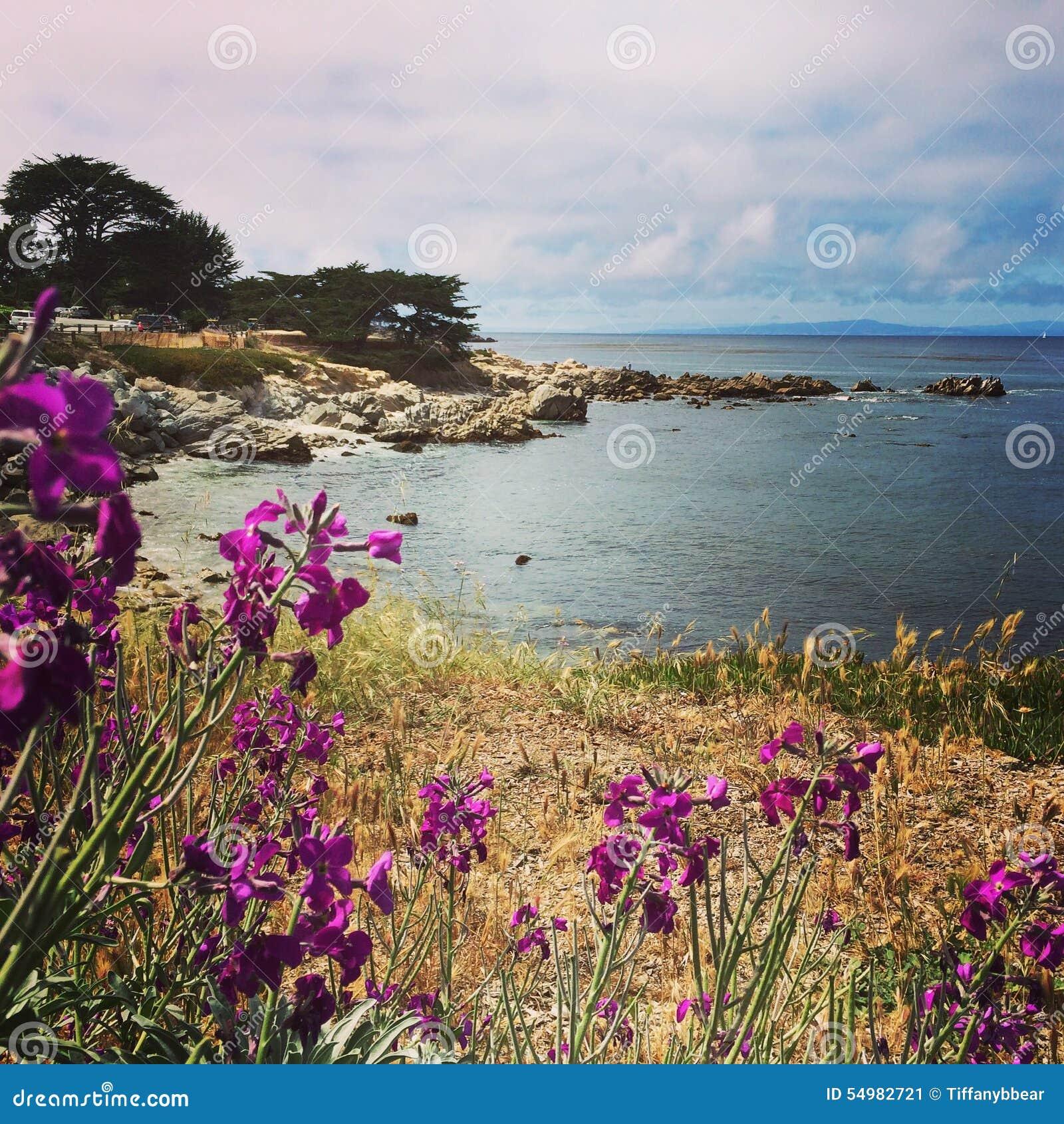 Kust- landskap för Monterey fjärd