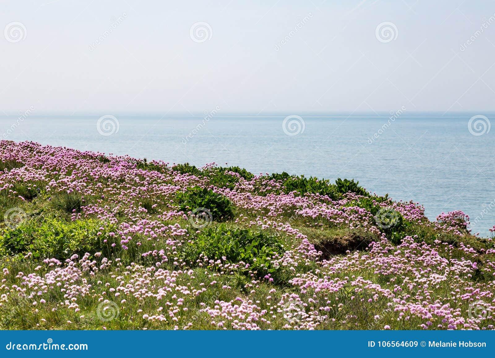 Kust- landskap, Sussex