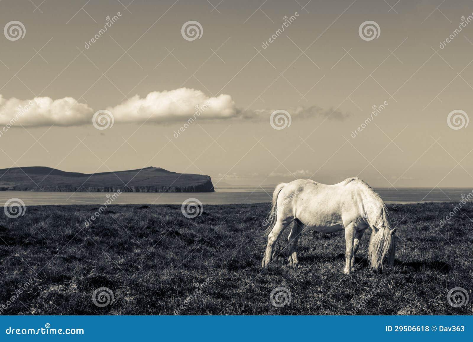 Kust zwart-wit van het paard