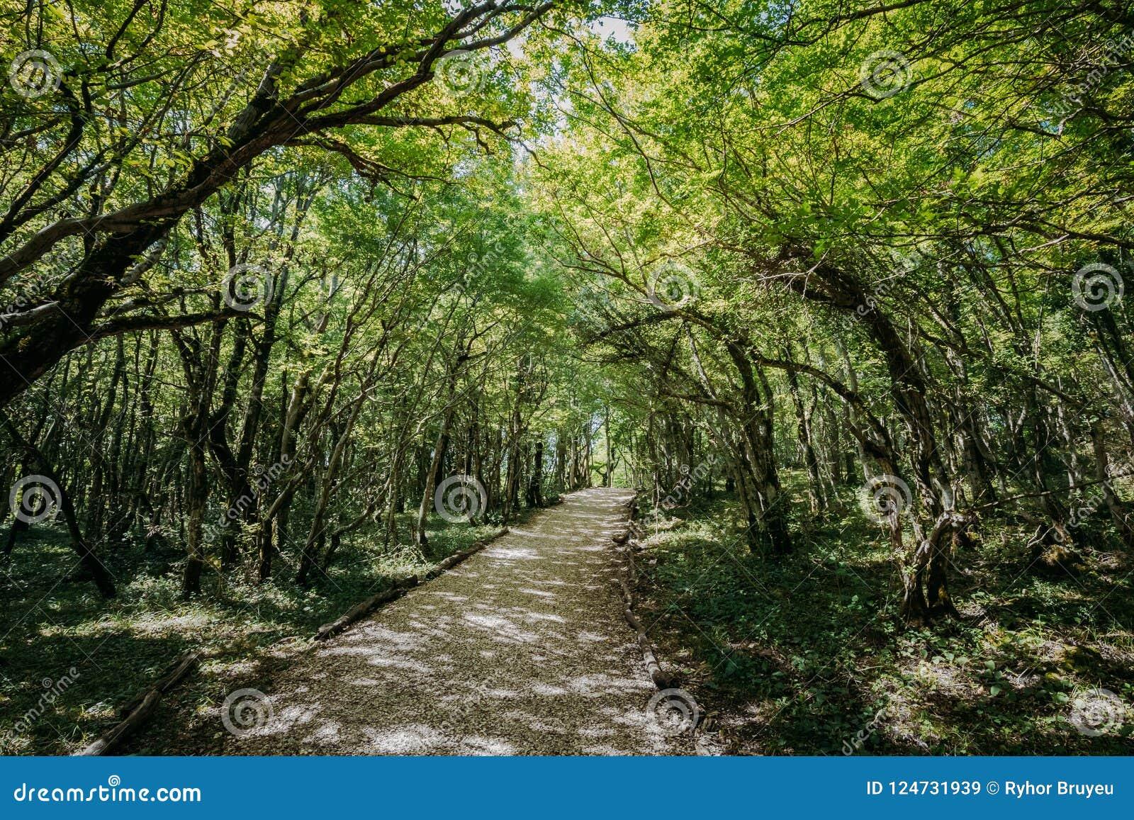 Kutaisi Georgia Forest Road Lane Pathway Among grönska i tillstånd