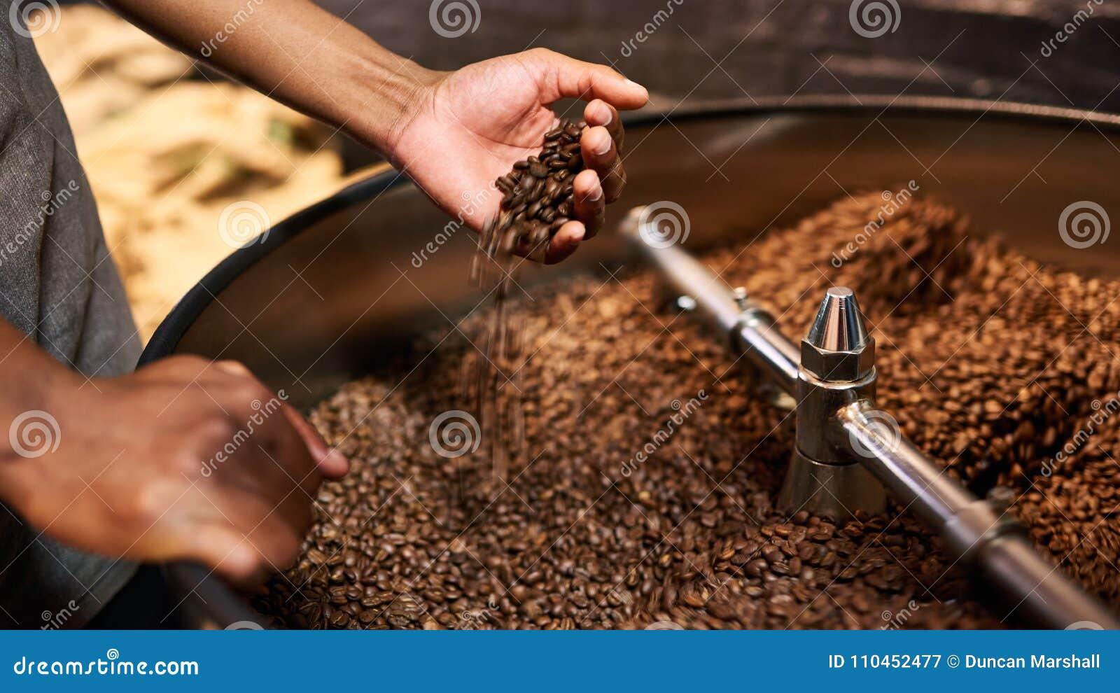 Kvalitets- kontroll av grillade kaffebönor i afrikanska händer för man` s