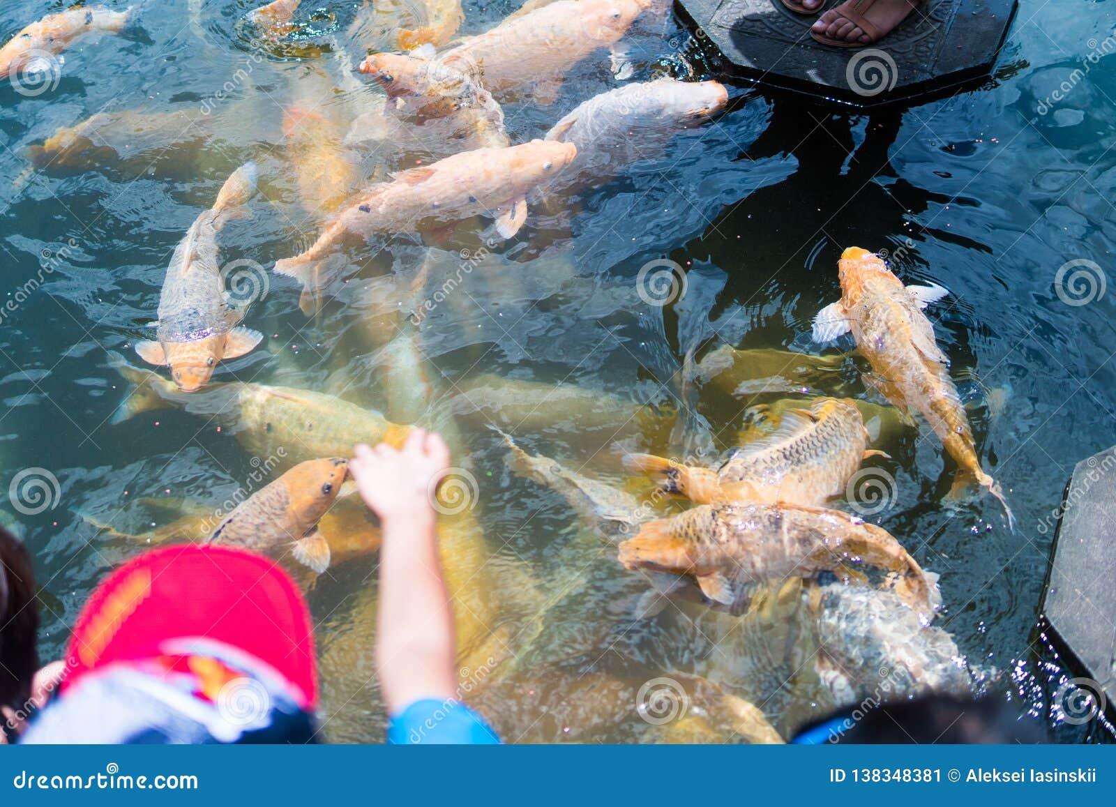Kvinna och barn som matar den härliga färgade fisken i dammet Taman Tirtagangga tempel på Bali